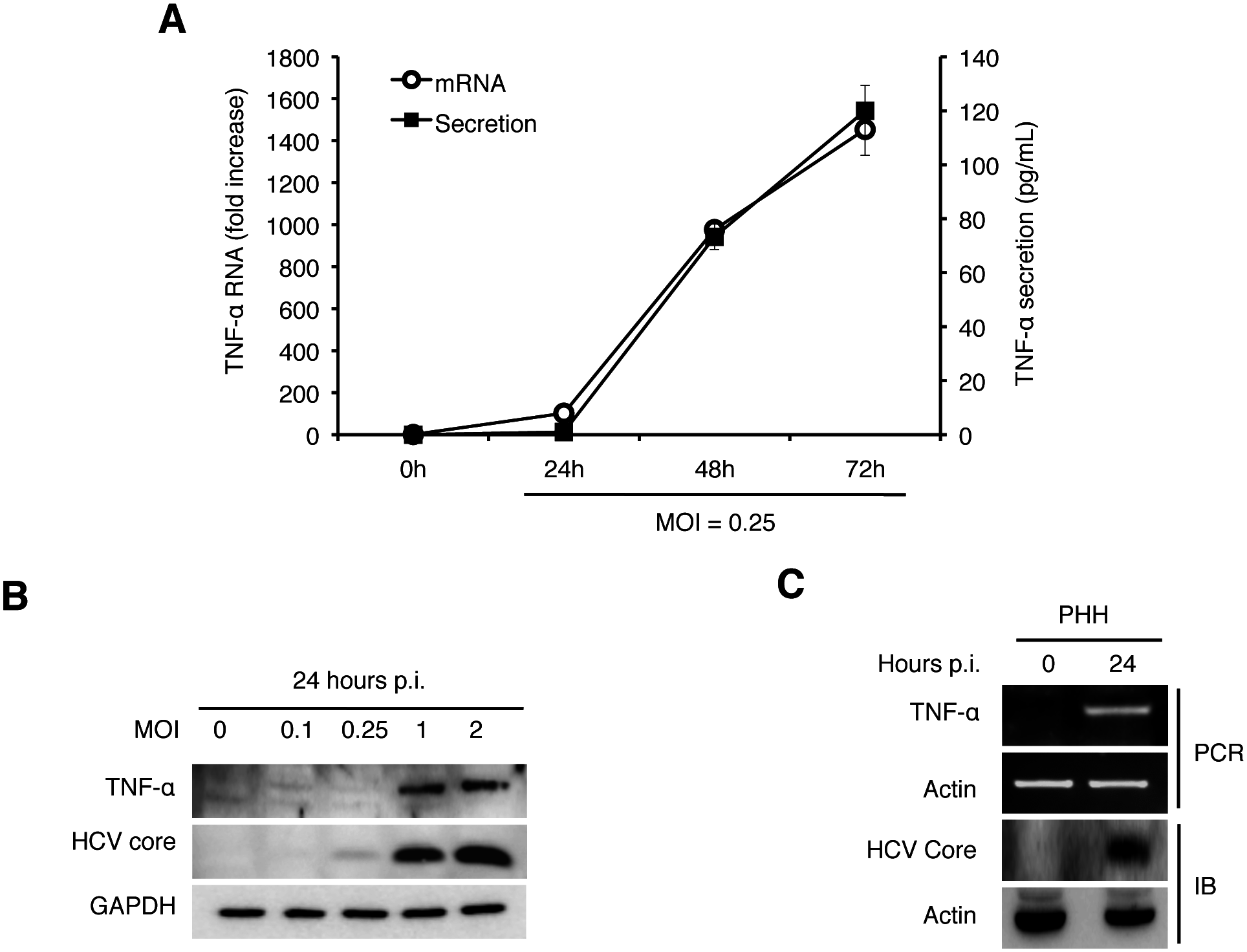 Induction of TNF-α by HCV.