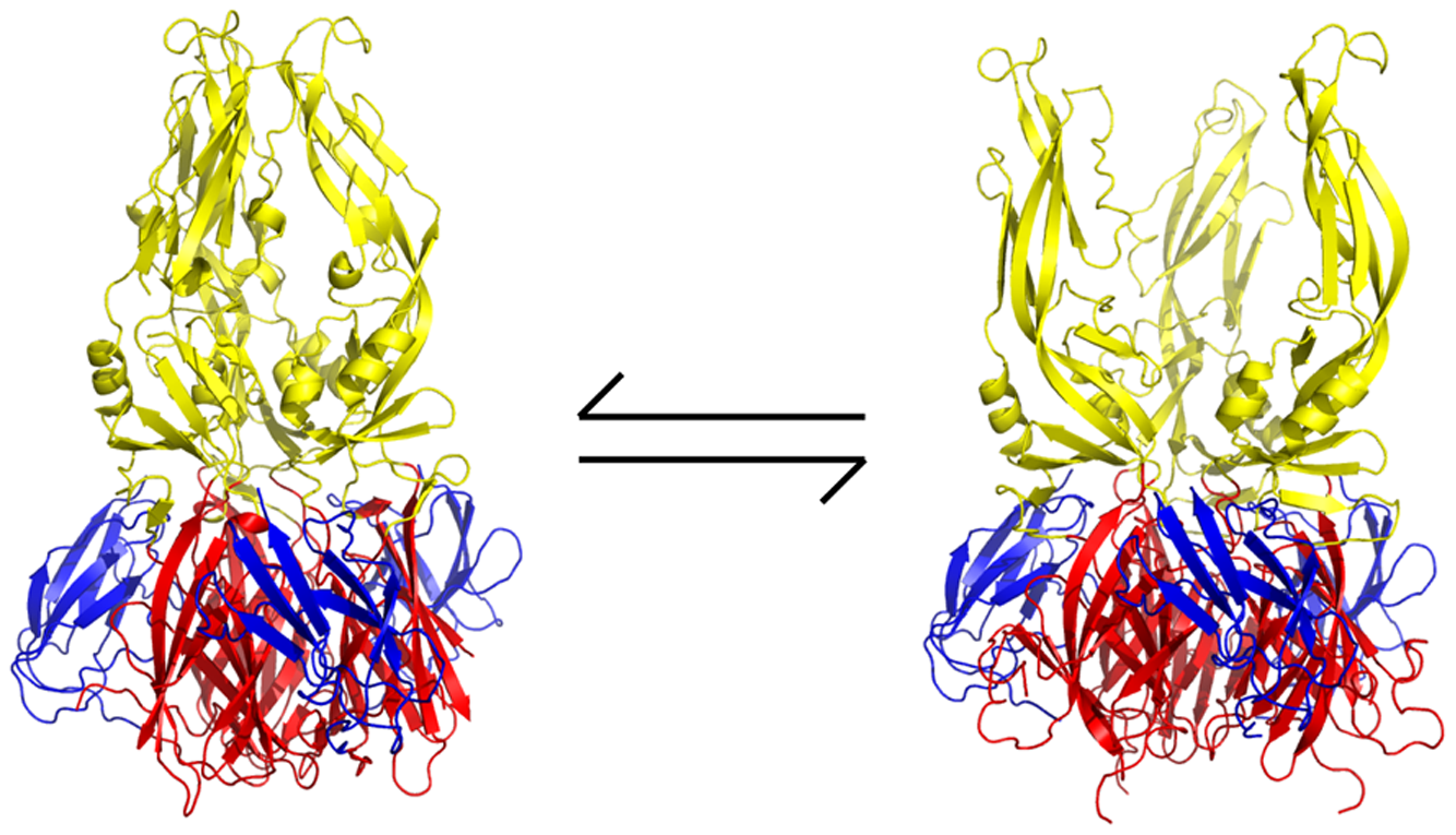 Proposed mechanism of action of small-molecule inhibitors and postulated equilibrium between two conformations of the sE trimer.