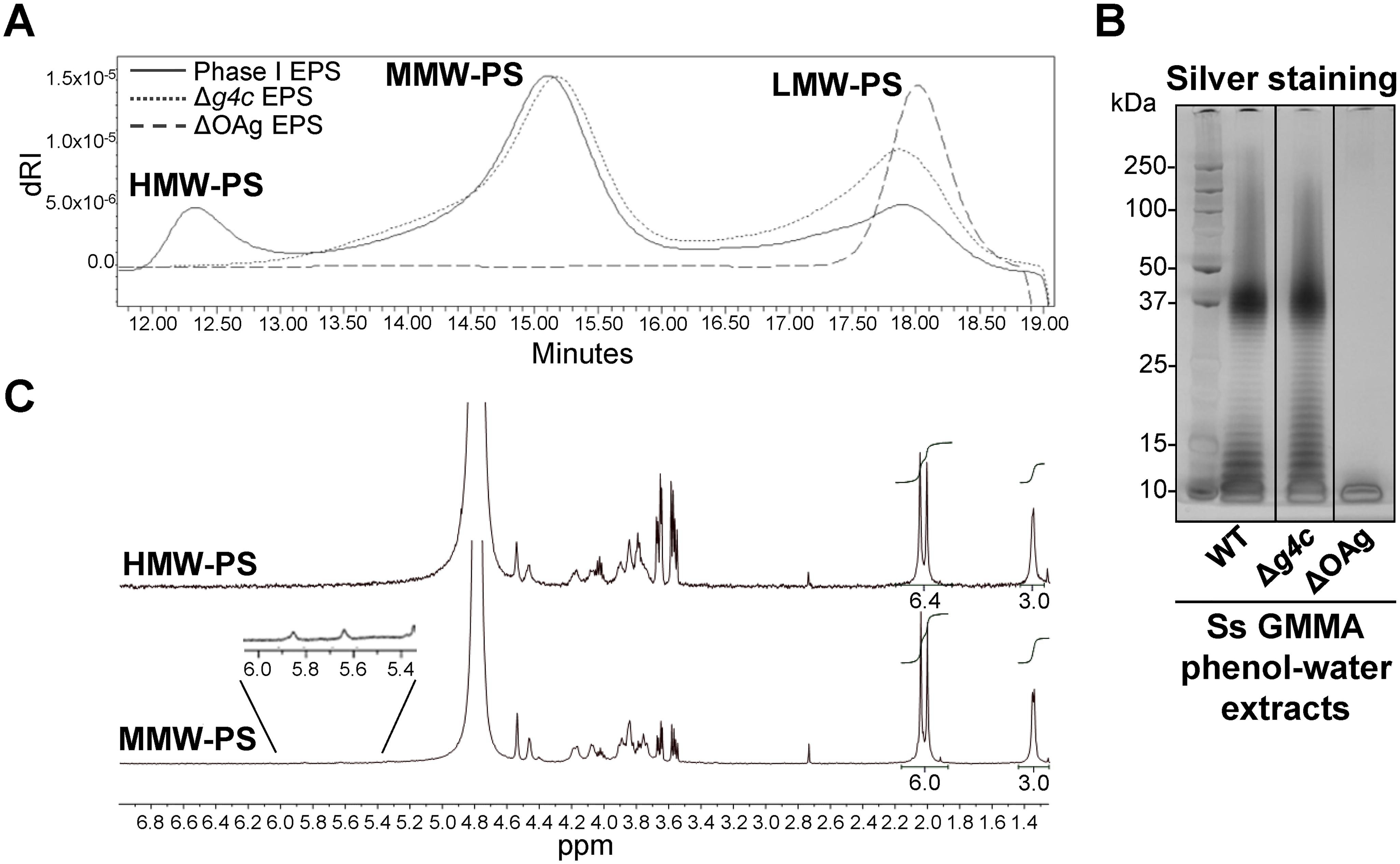 <i>S</i>. <i>sonnei g4c</i> cluster encodes for a high molecular weight O antigen polysaccharide.