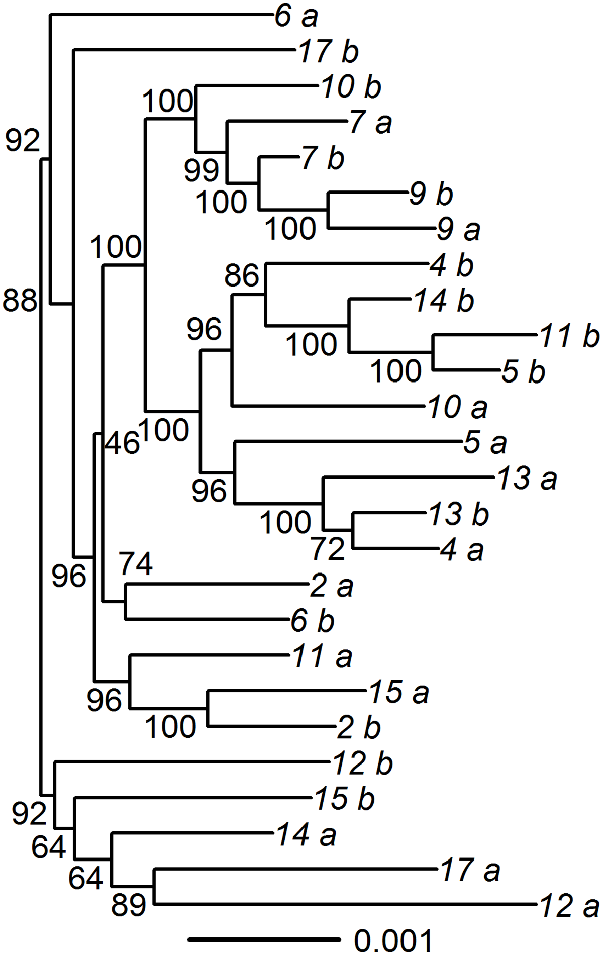 Phylogenic tree of paired specimens that underwent oligonucleotide enrichment and high-throughput sequencing.