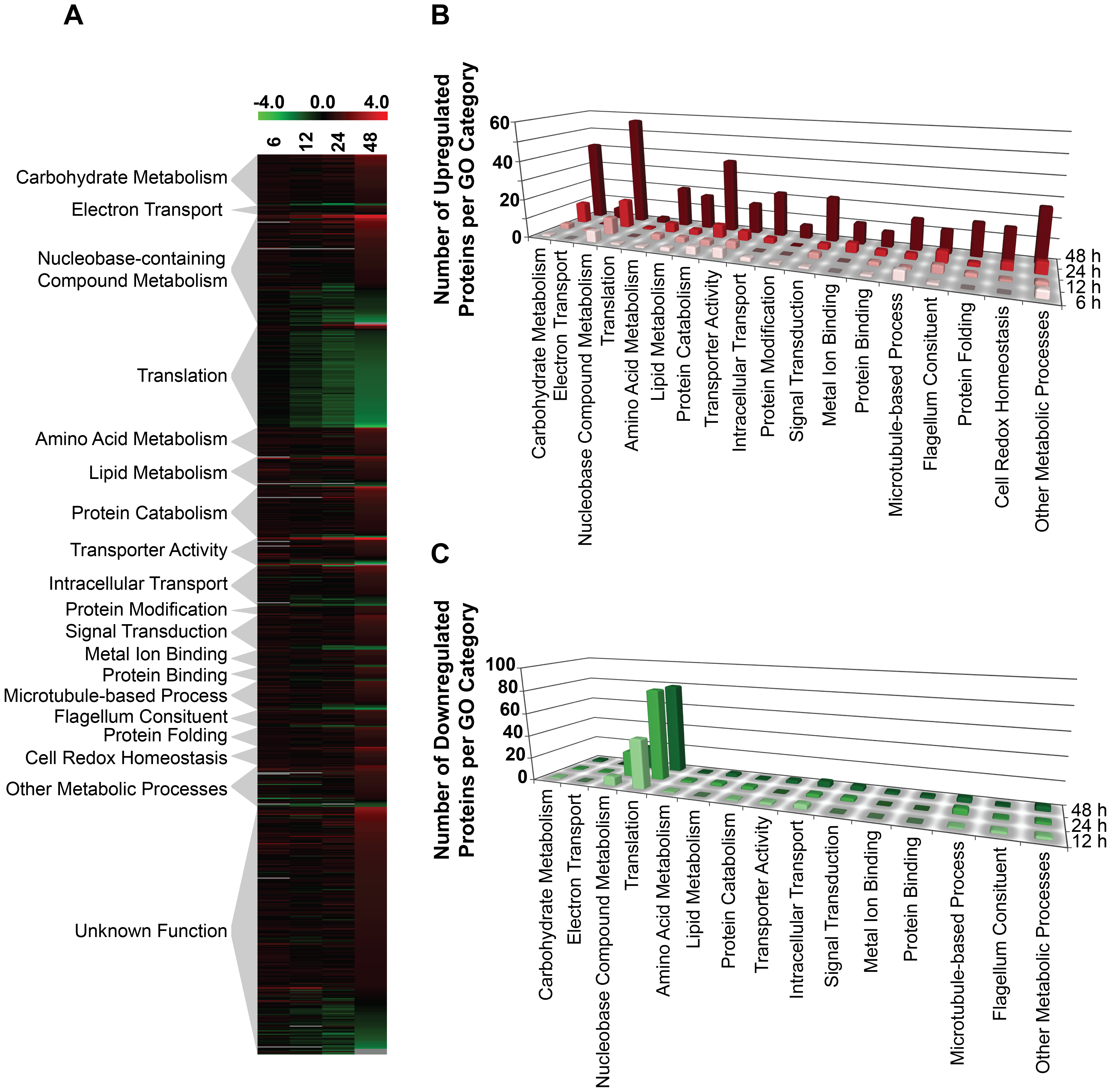 Global proteome remodeling in purine-starved cells.