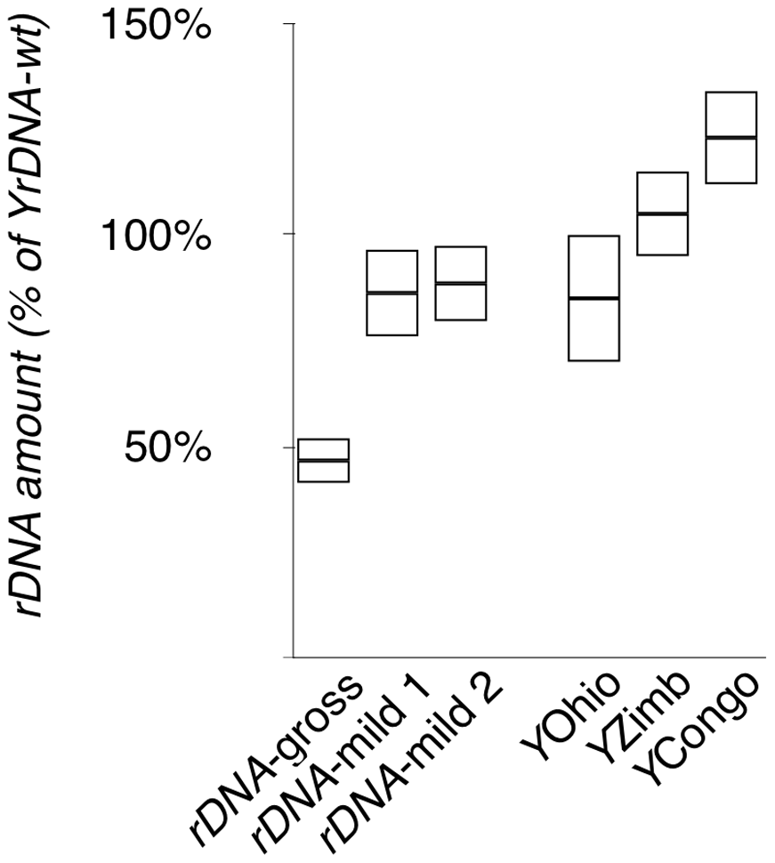 Quantification of <i>rDNA</i> copy number of the chromosomes in this study.