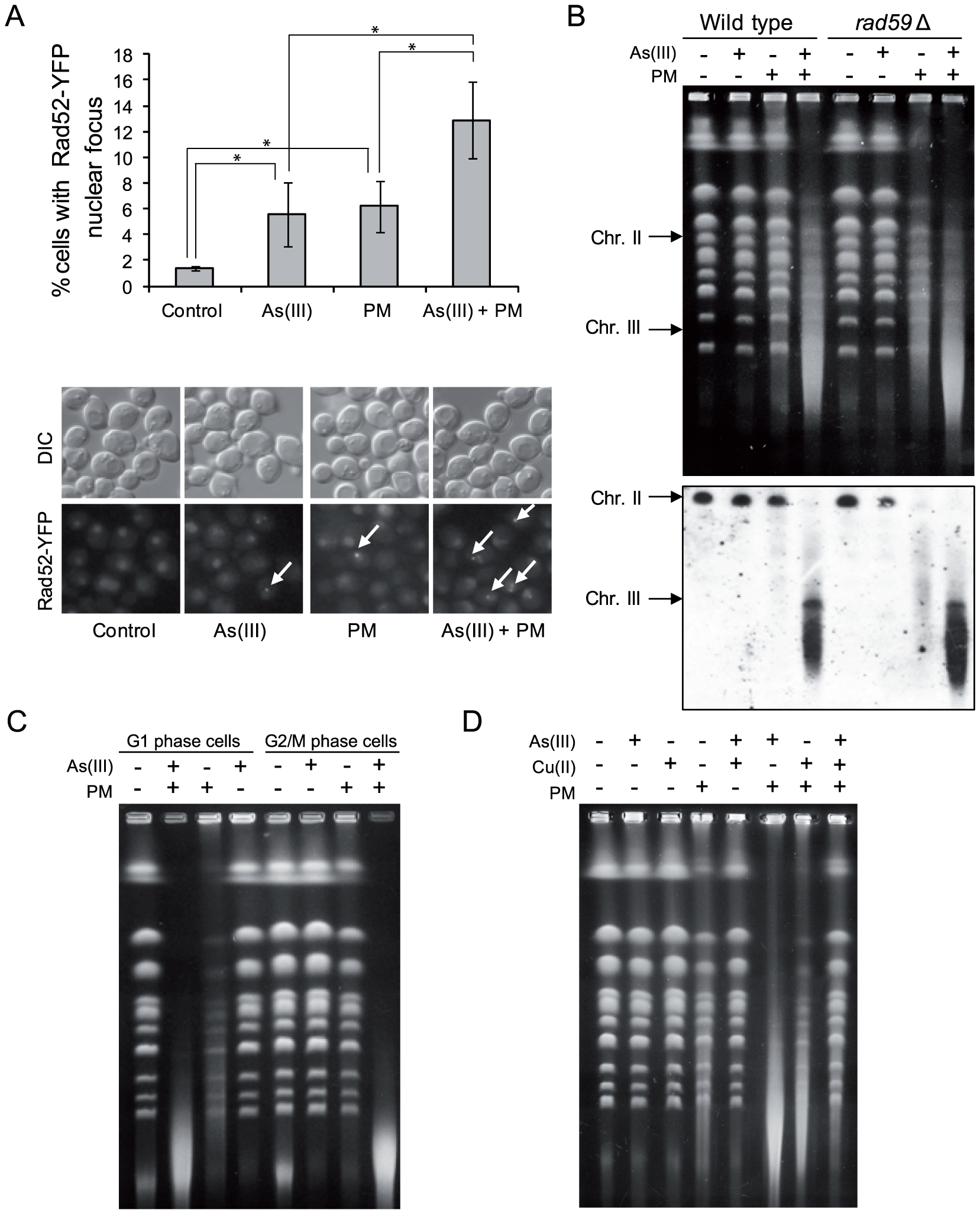 As(III) and phleomycin co-treatment increases formation of DSBs.
