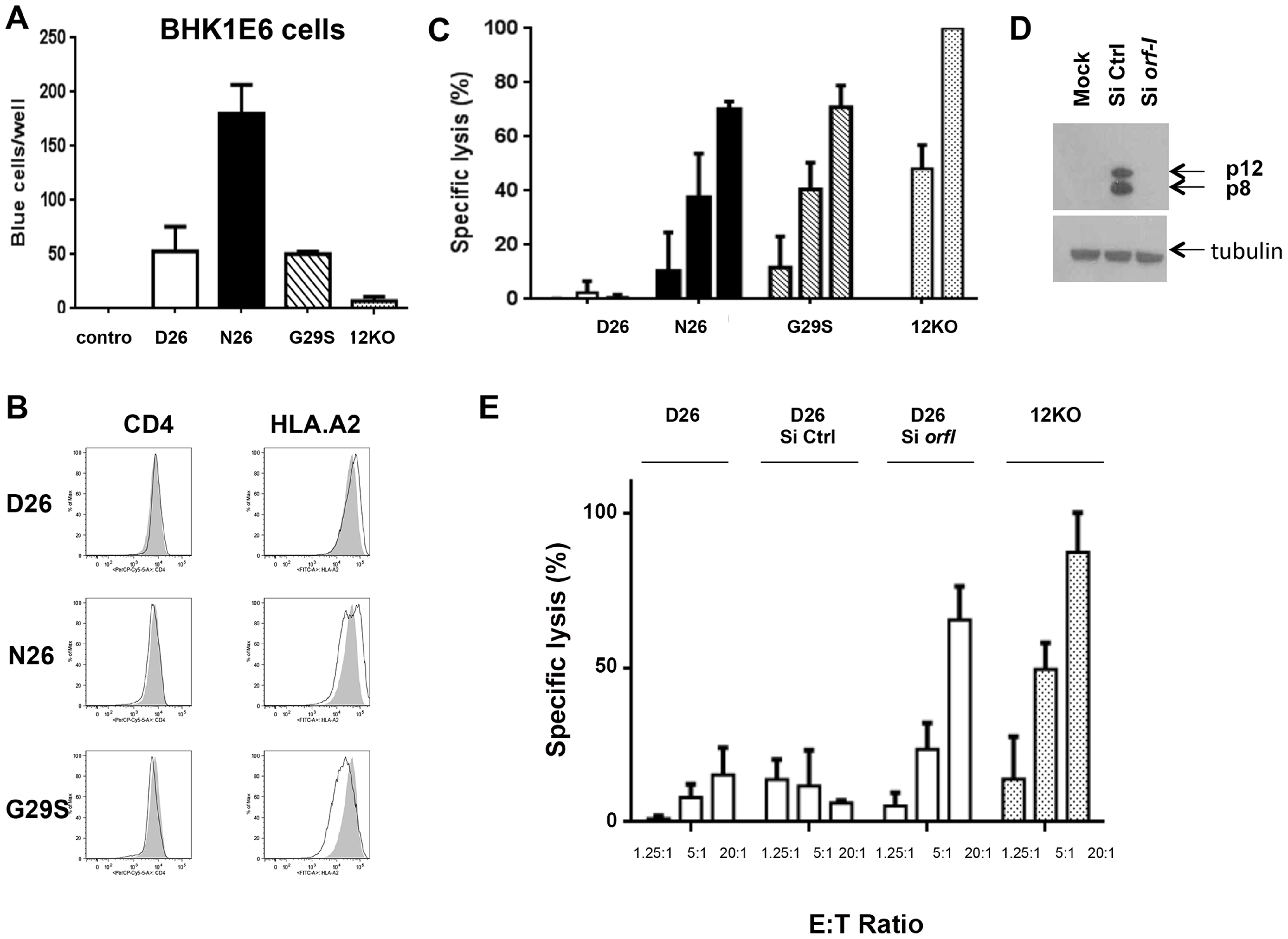 Susceptibility of HTLV-1 producing CD4<sup>+</sup> cell lines to CTL killing.