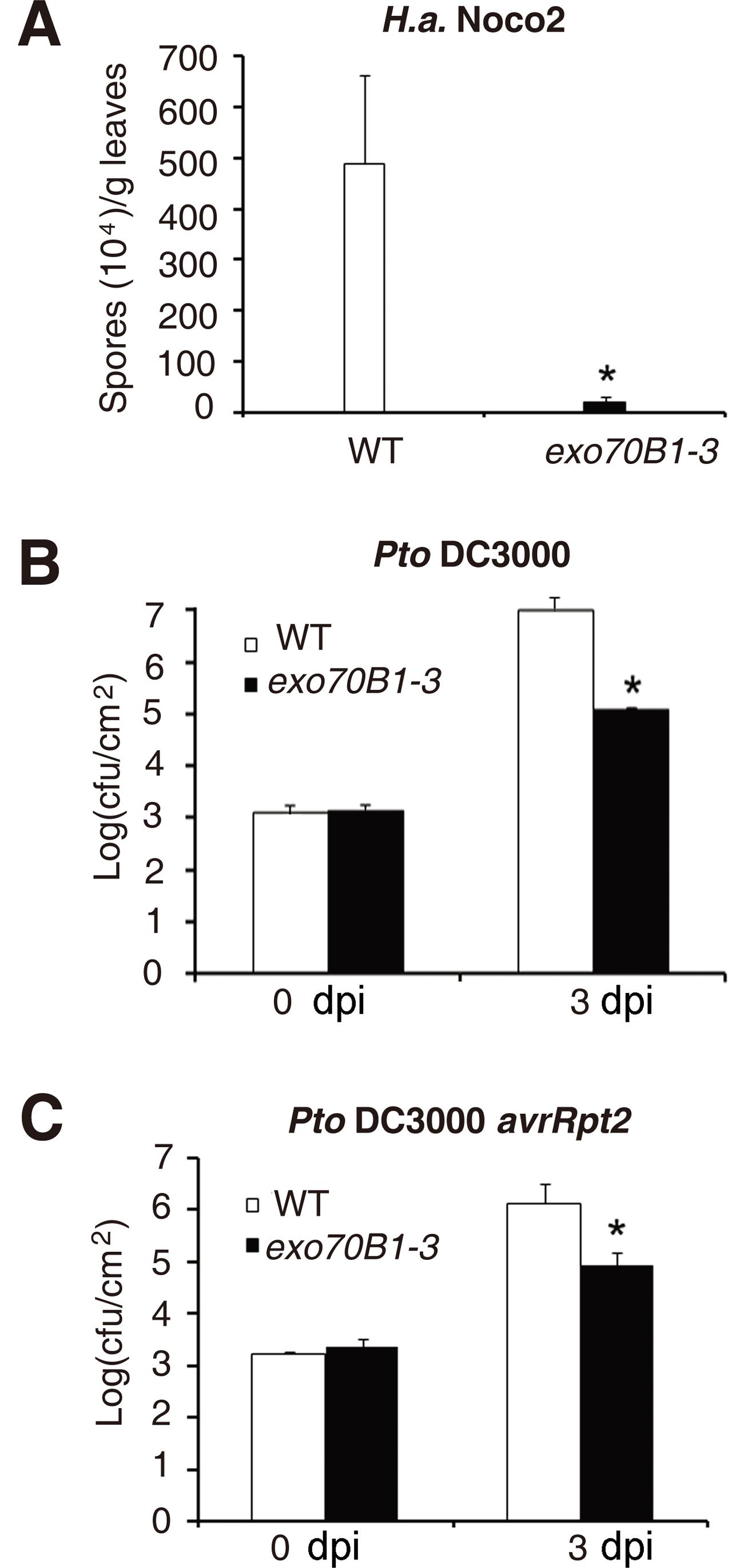 <i>exo70B1-3</i> mutants display enhanced resistance to <i>H.a.</i> Noco2, <i>Pto</i> DC3000 and <i>Pto</i> DC3000 <i>avrRpt2</i>.