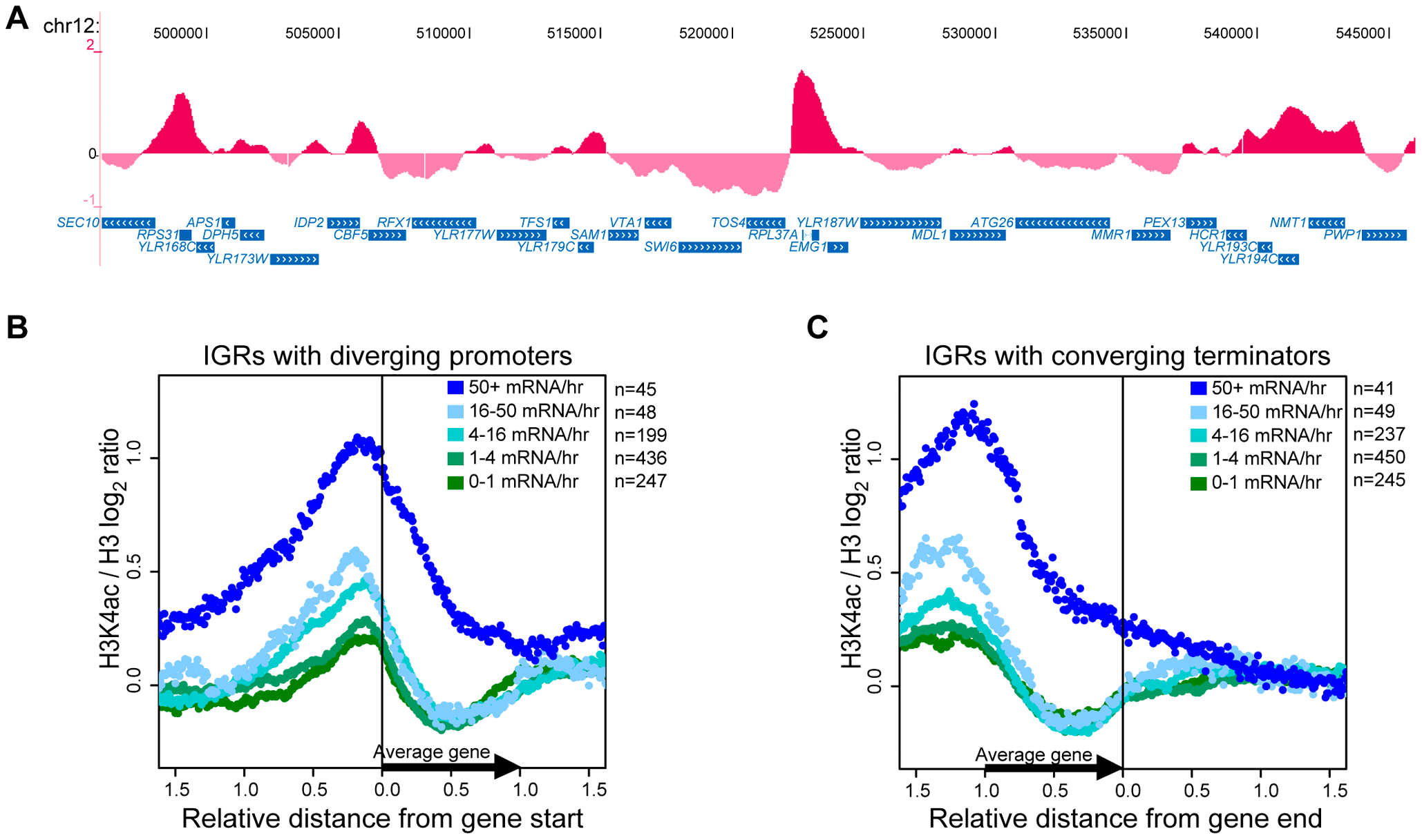 H3K4ac Is Enriched at Promoters of Transcribed Genes.