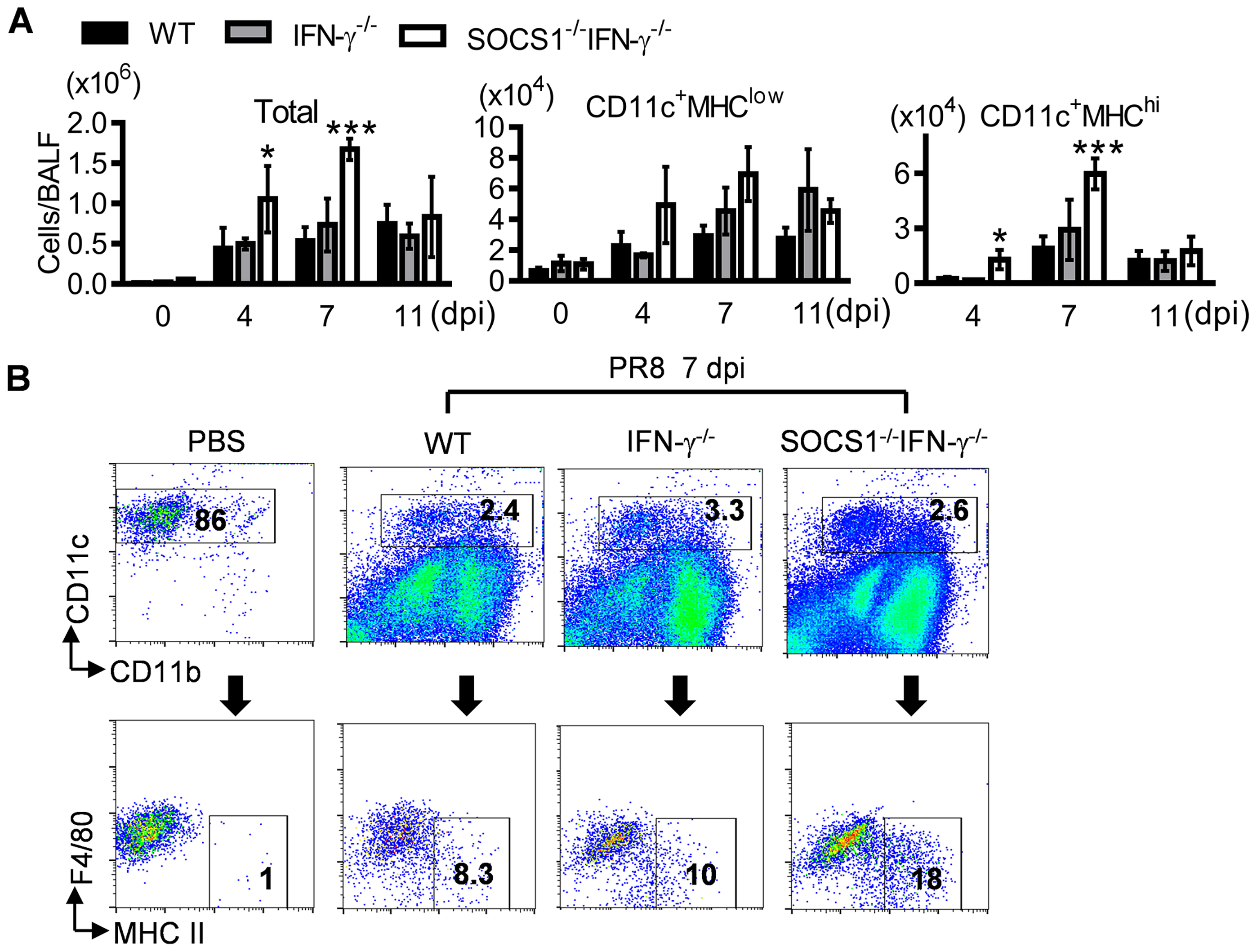 Influenza infection enhances DC recruitment in SOCS1<sup>−/−</sup>IFN-γ<sup>−/−</sup> mice.
