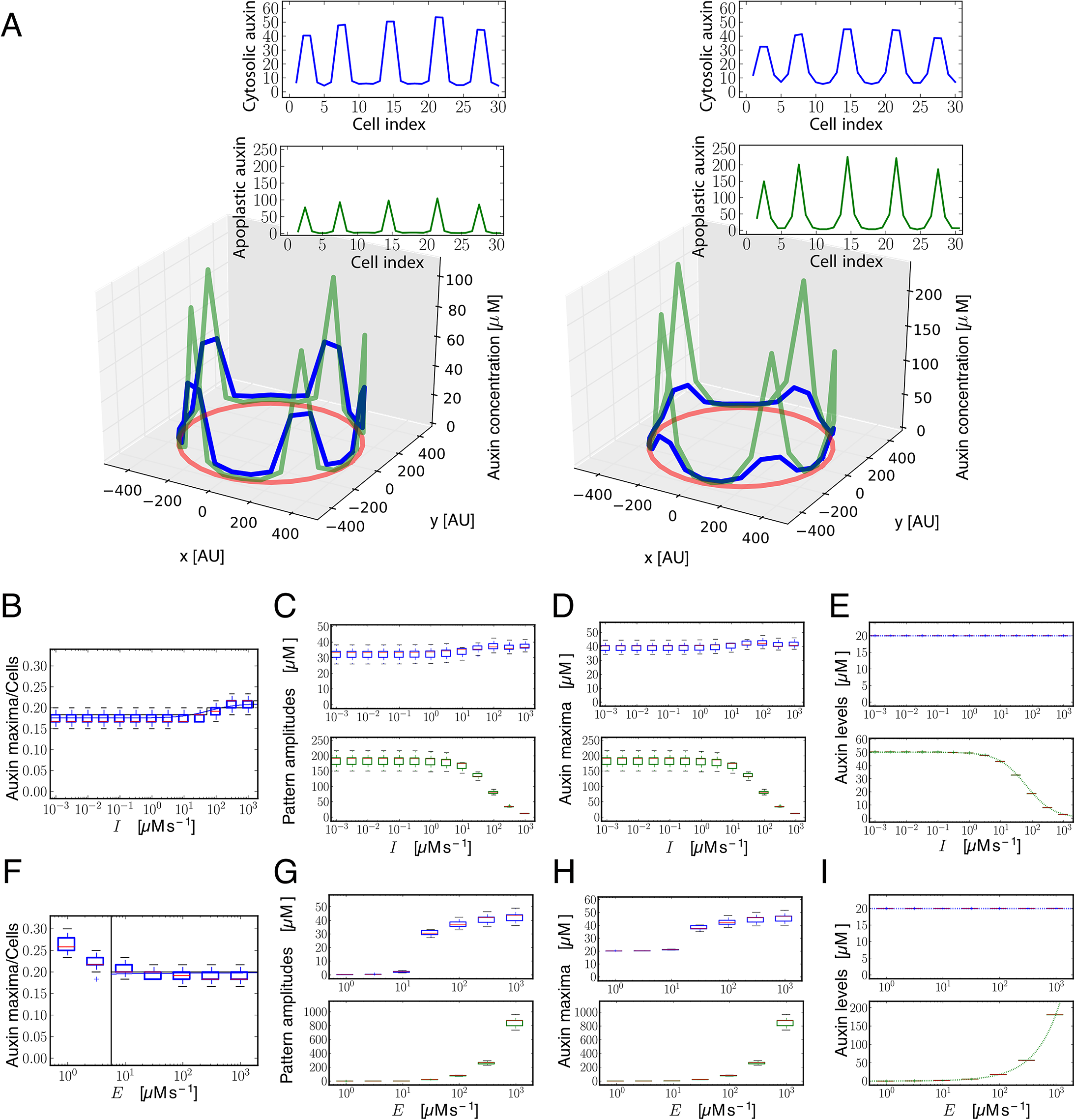 Modeling shows that influx carriers diminish differences in the concentration of auxin in the apoplast.