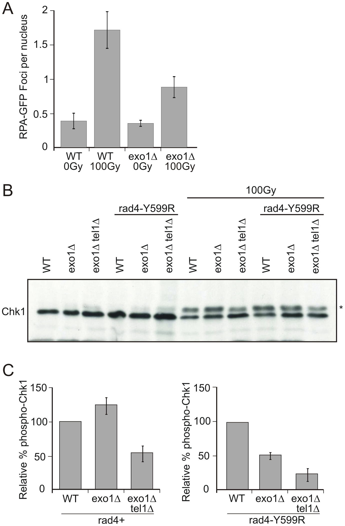 Chk1 phosphorylation is reduced in <i>rad4</i>-Y599R mutant cells when <i>exo1</i> is deleted.