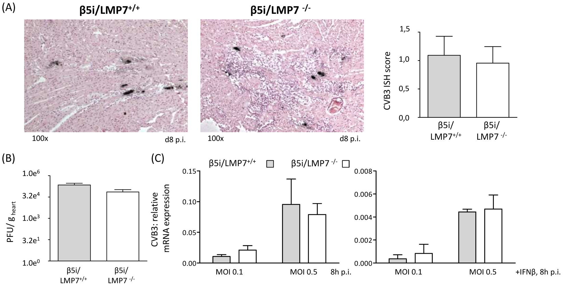 Viral load is not affected in IP-deficient mice.