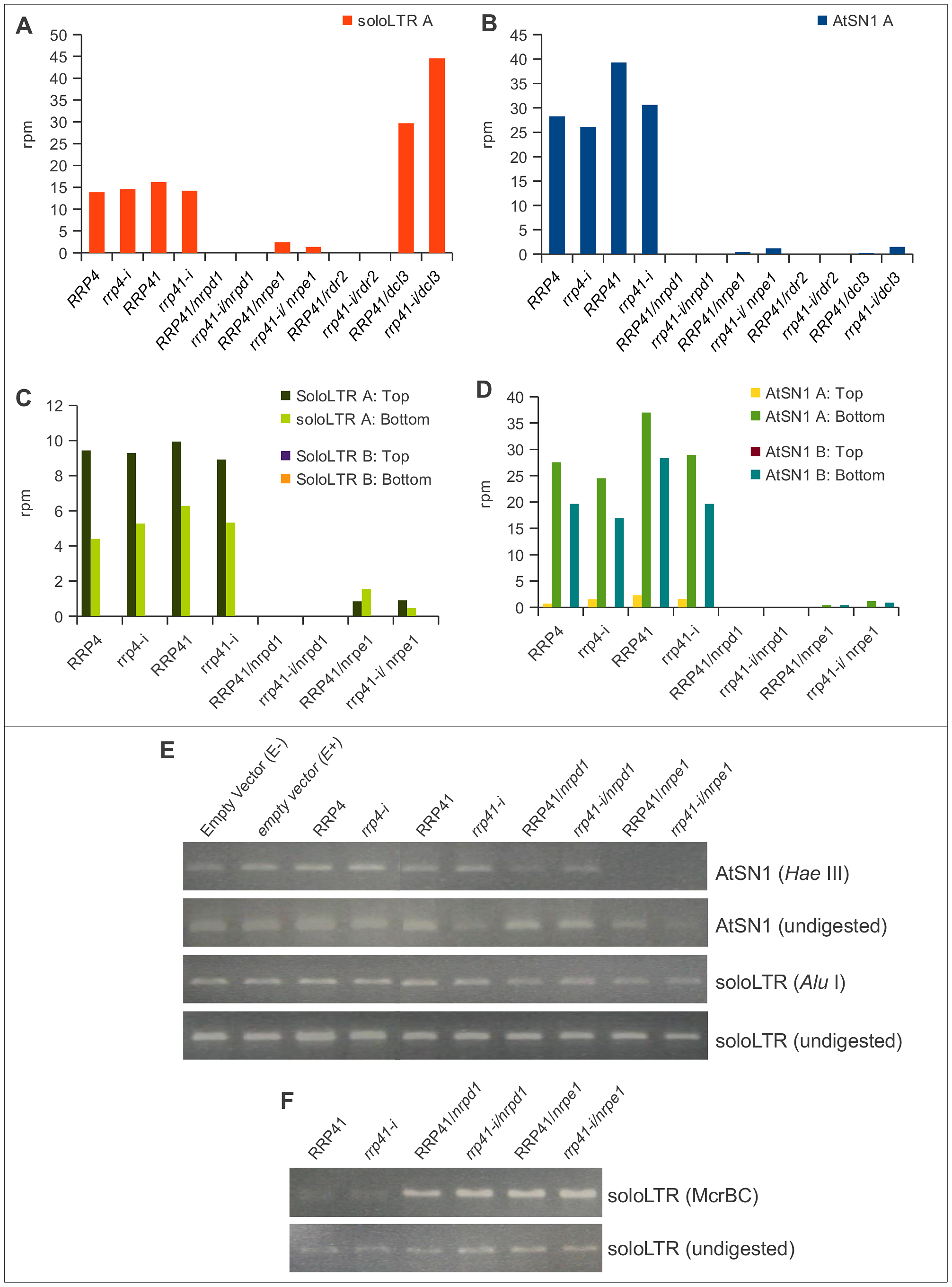 smRNA accumulation and DNA methylation in solo LTR and AtSN1 loci is unaltered upon exosome depletion.