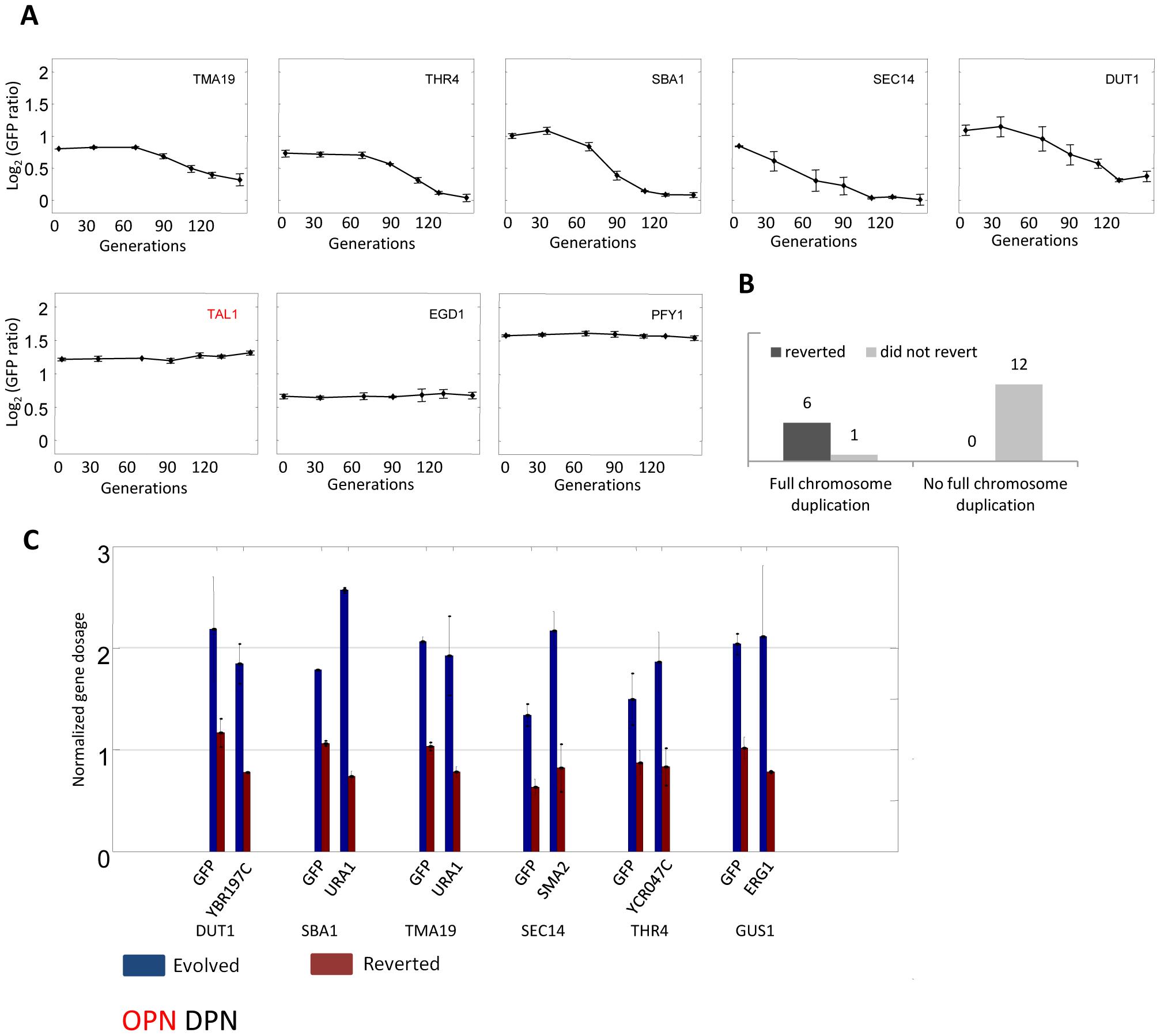Reversion of evolution by chromosome duplication.