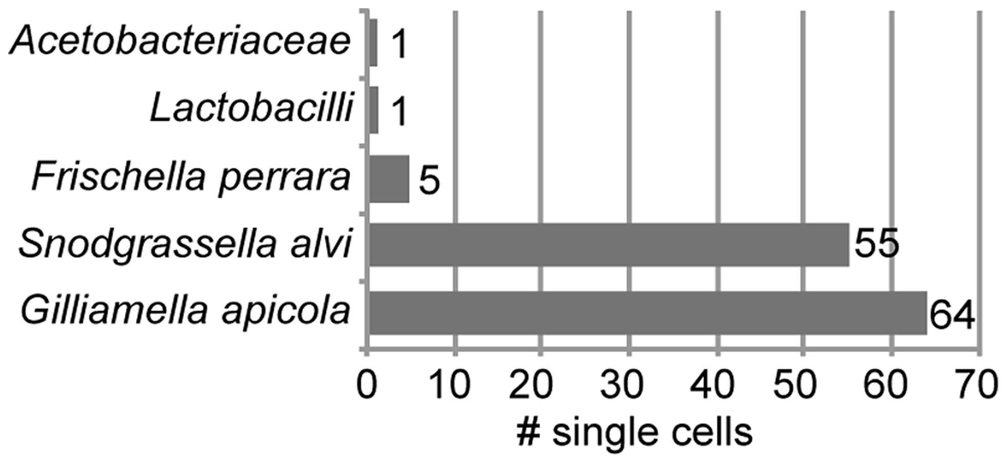 Taxonomic classification of 126 bacterial cells sorted from midguts and ileums of honey bees.