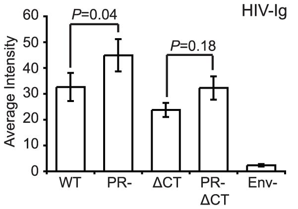 Binding of polyclonal human antibodies to HIV-1 virions.