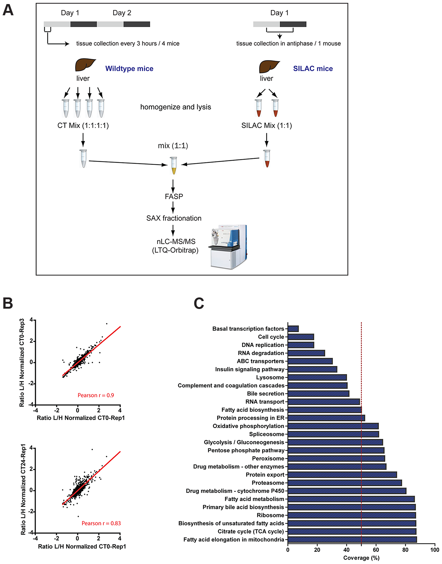 SILAC-based circadian proteome of the mouse liver.