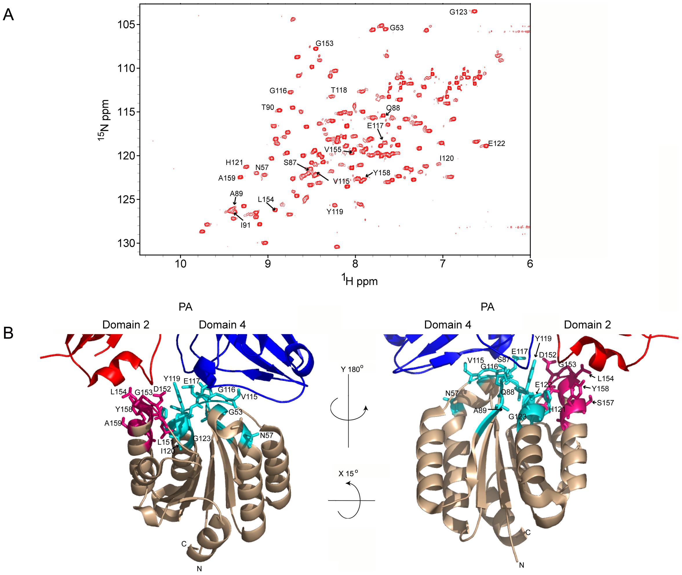 A) <sup>1</sup>H-<sup>15</sup>N TROSY-HSQC of the ANTXR2 VWA domain.