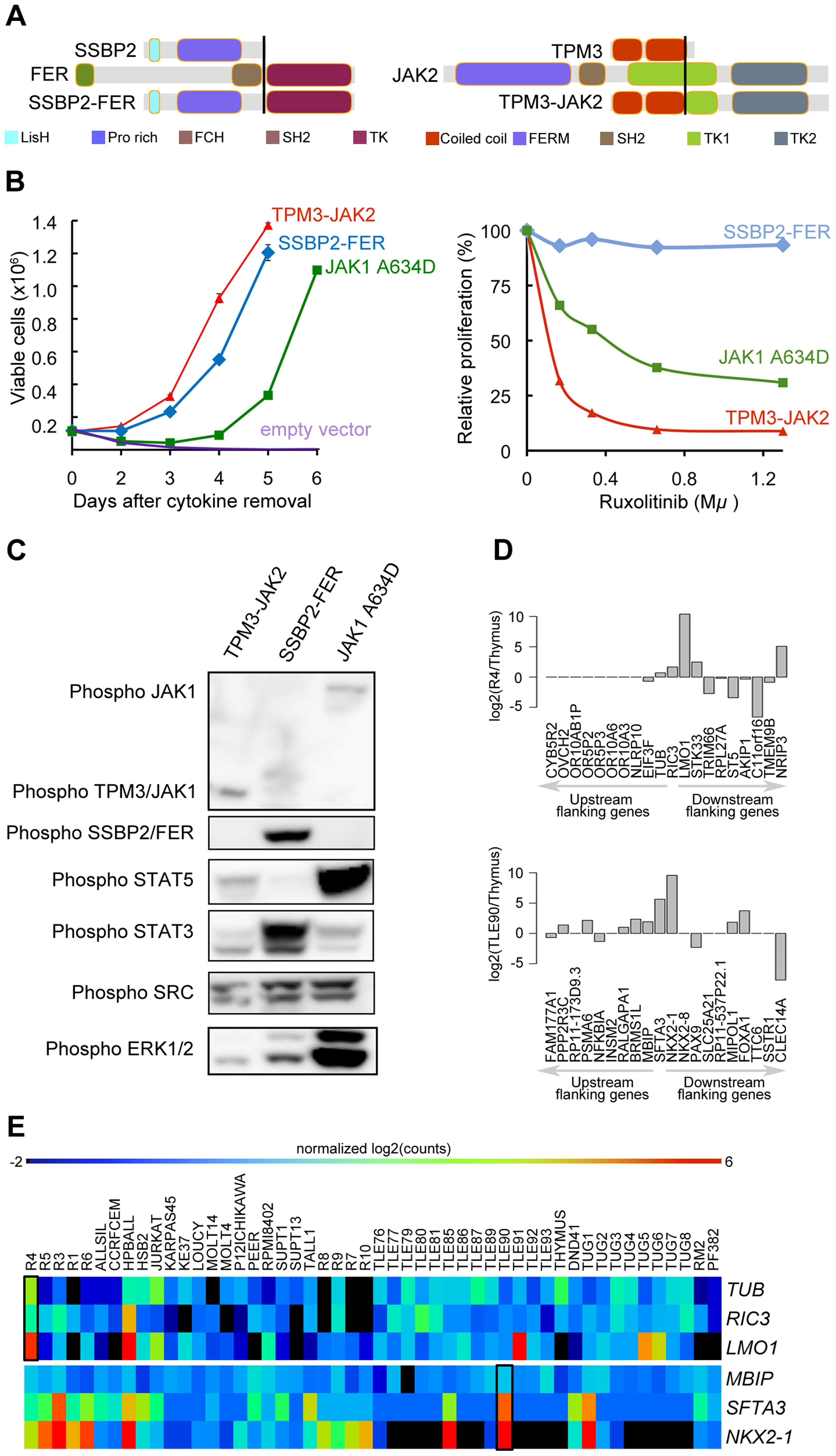 <i>SSBP2-FER</i> and <i>TPM3-JAK2</i> fusions transform lymphoid cells and show constitutive activity.