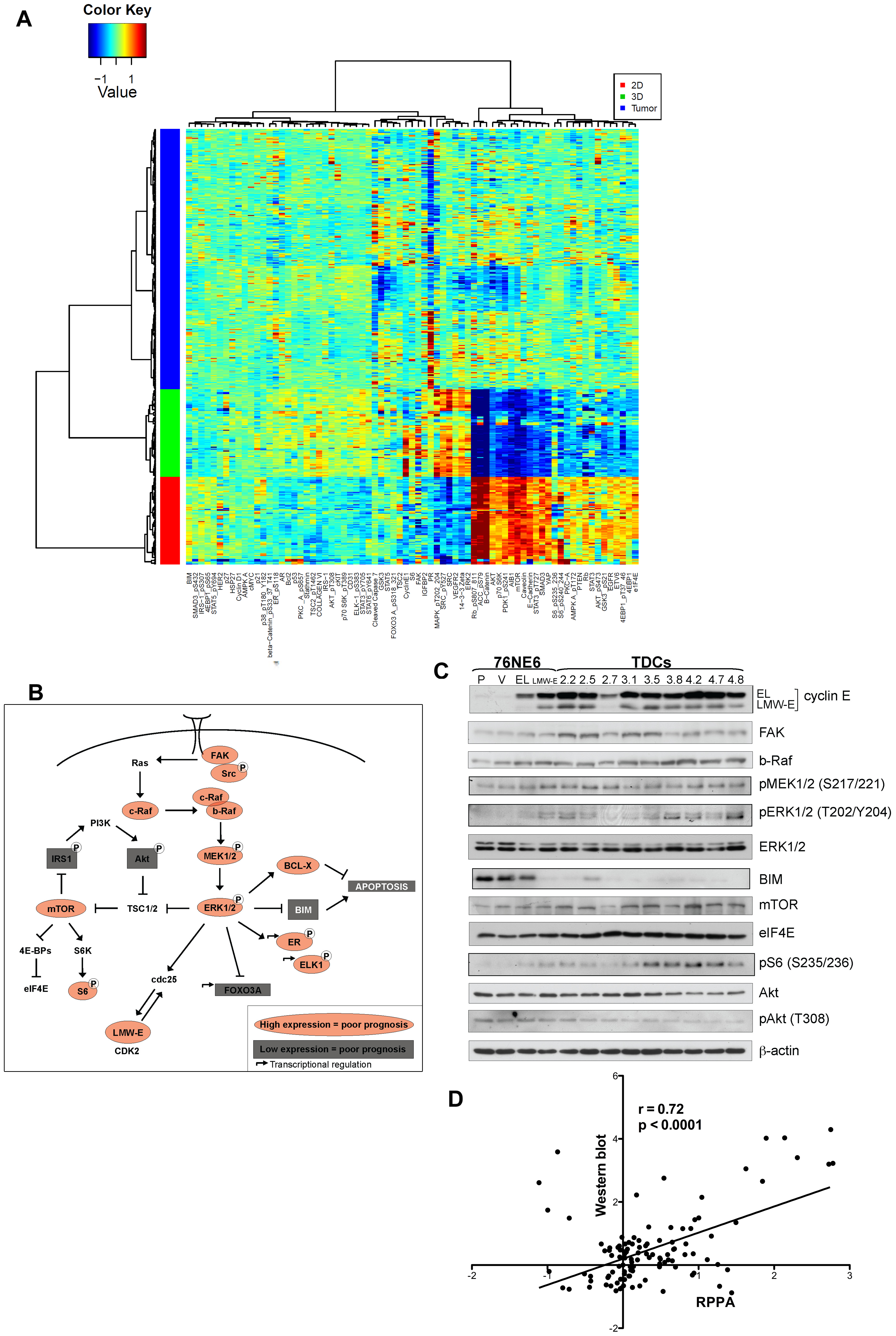 High LMW-E expression is associated with activated b-Raf-ERK1/2-mTOR pathway <i>in vitro</i> and in patient tissues.