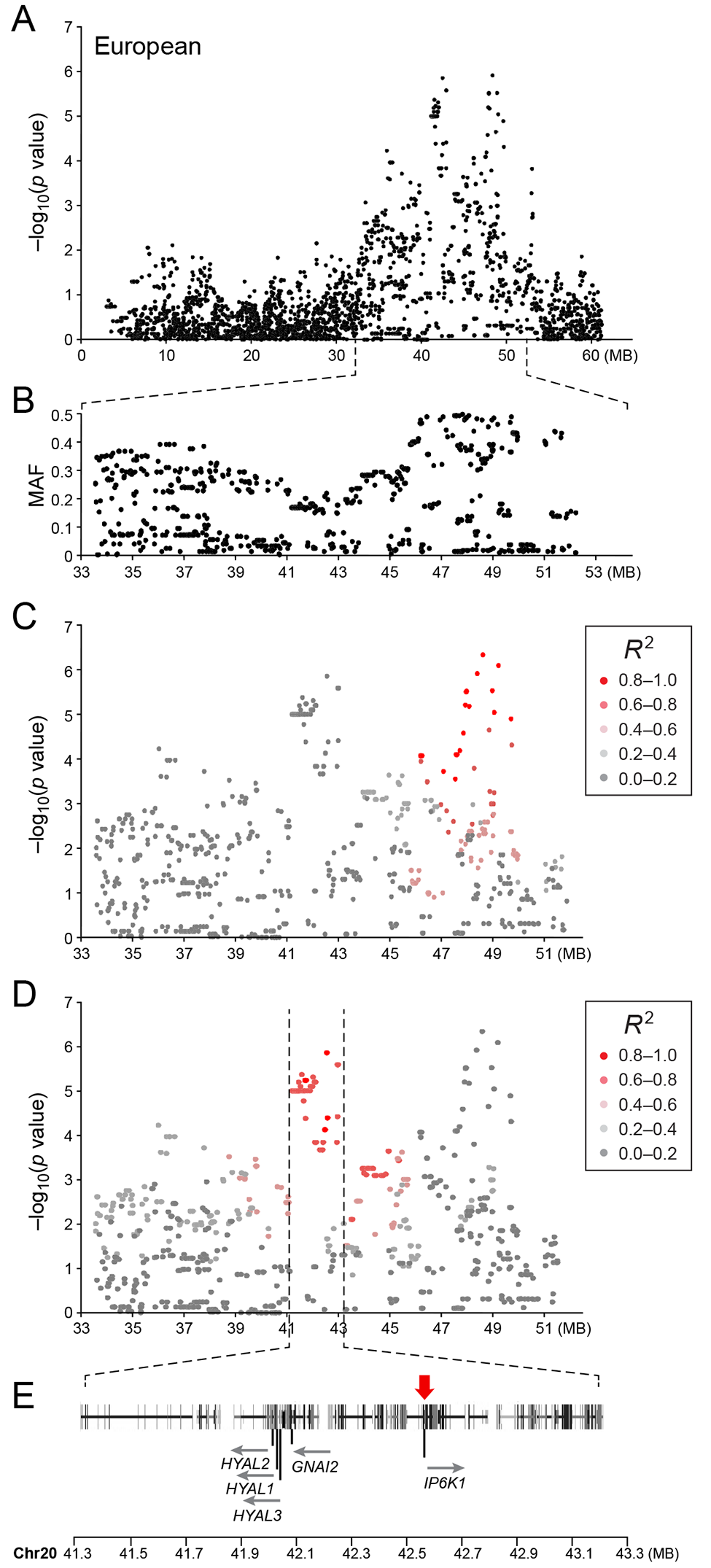 a) Close up view of the most associated region from the European GWAS analysis. b) Minor allele frequency of the associated region. c) Further close up of the associated region showing the LD structure of the SNPs in the 48 MB locus relative to the most associated SNP in the locus. d) Further close up of the associated peak showing the LD structure of the SNPs in the 42 MB locus relative to the most associated SNP in the locus. e) Close up view of the genes located on the associated haplotype in the 42MB region.