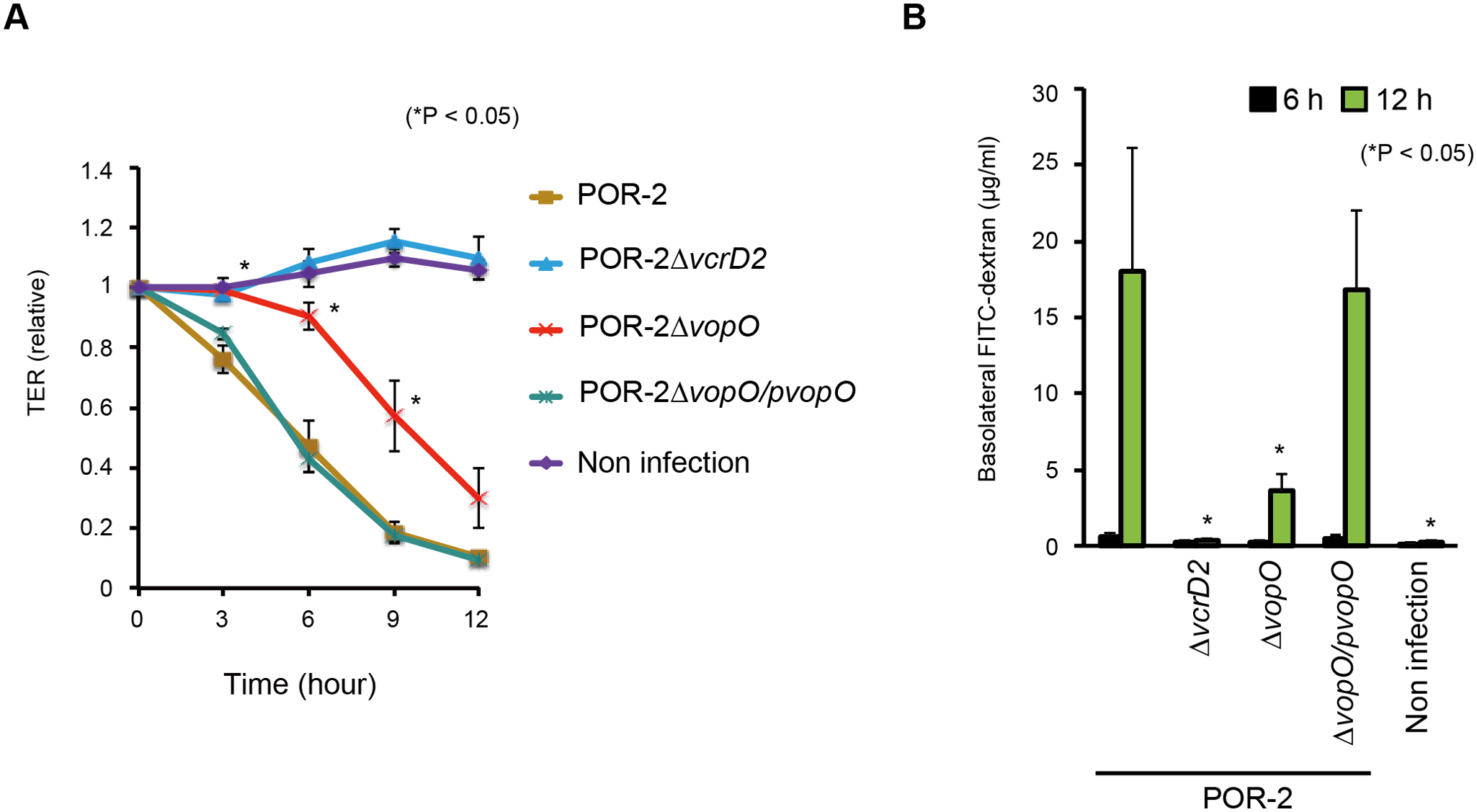 VopO disrupts the epithelial barrier.