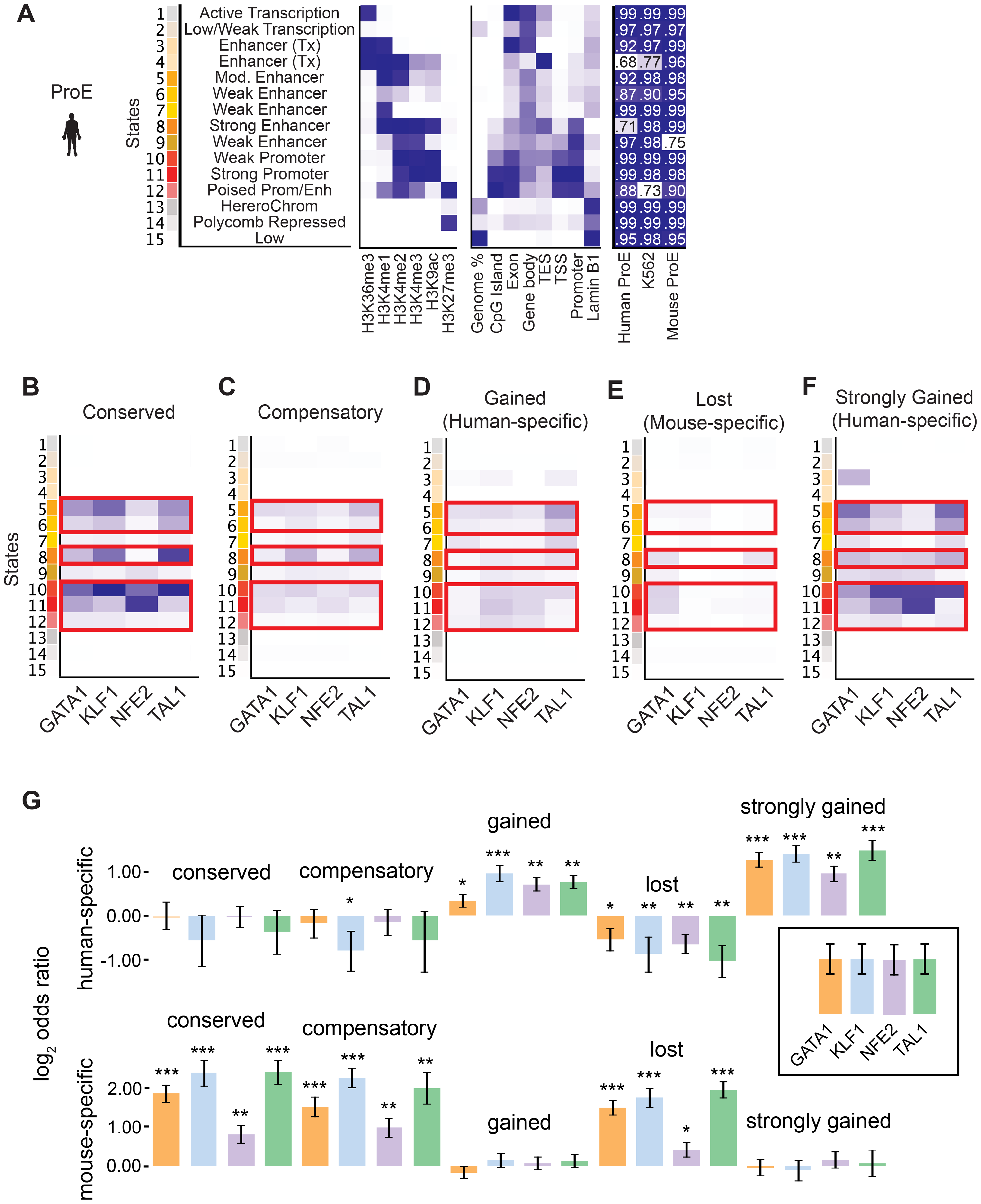 Species-specific and conserved transcription factor occupancy associates with histone modifications.