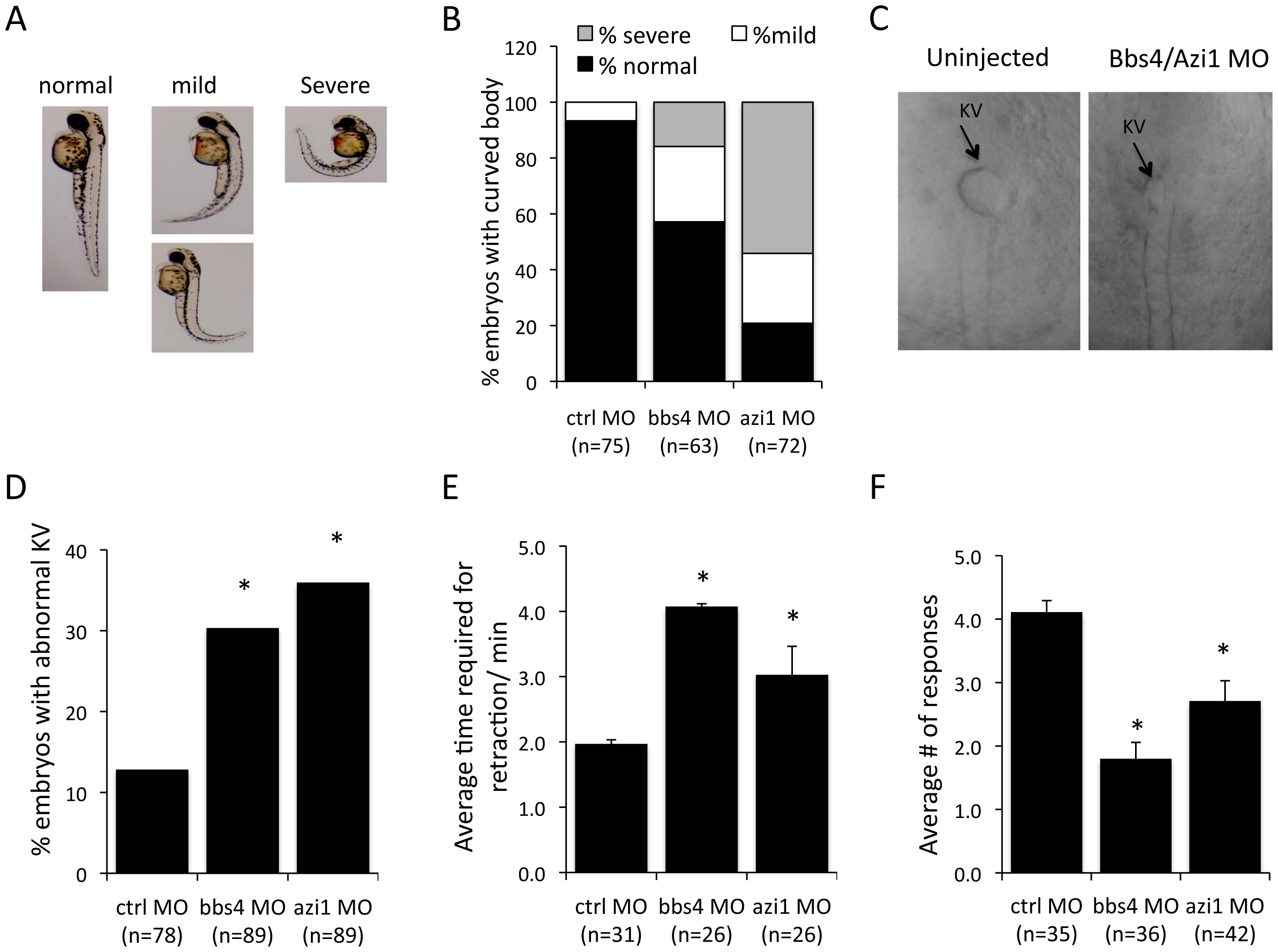 Azi1 (Cep131) knockdown causes defects in KV formation, melanosome trafficking and vision defects in zebrafish.