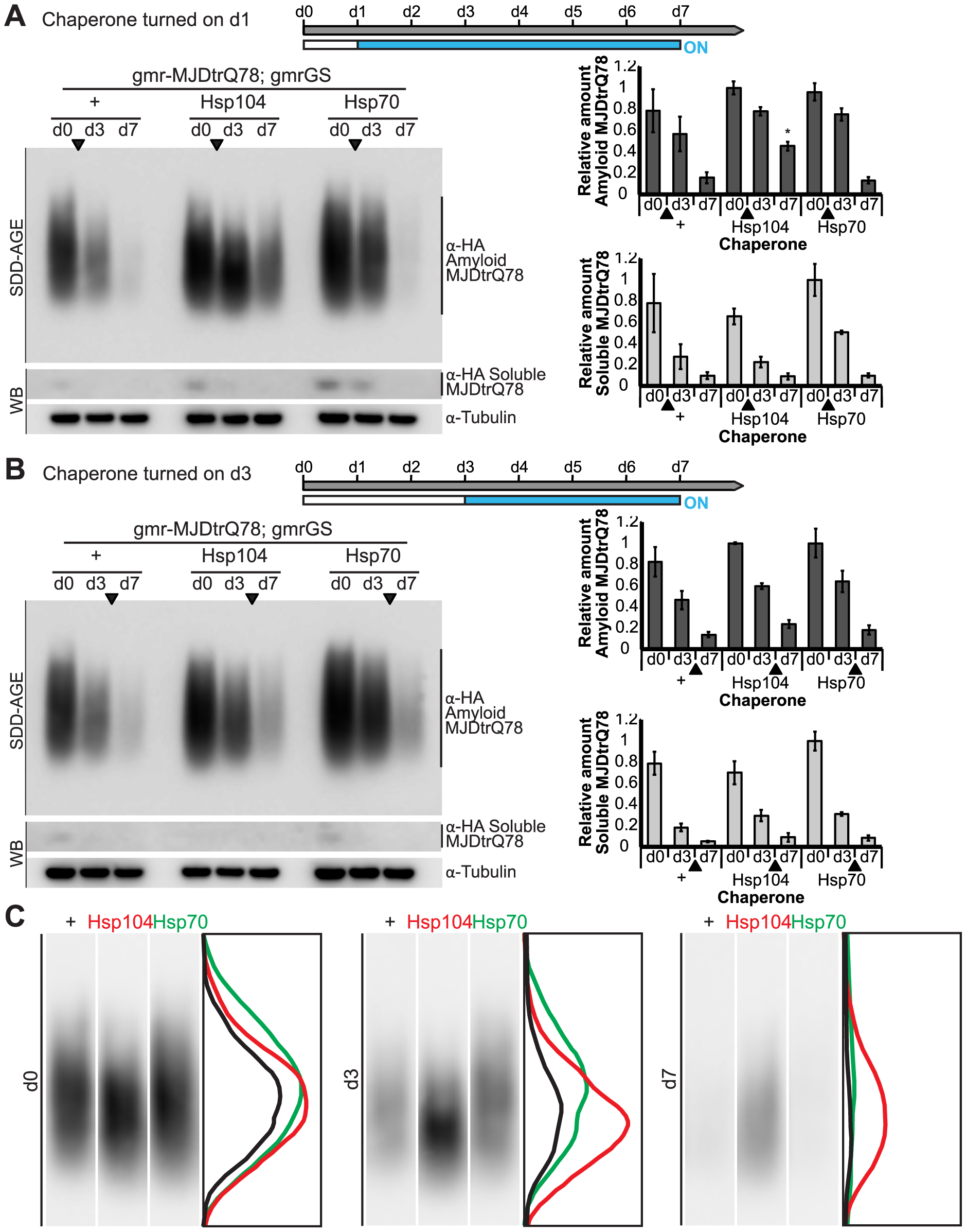 Hsp104 does not mitigate disease progression by clearing MJDtrQ78 amyloid fibrils.