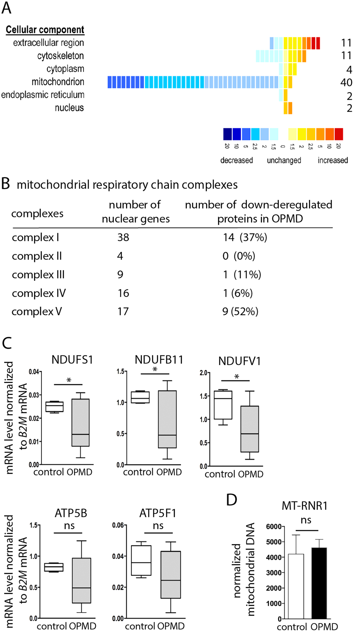 Decrease of mitochondrial protein levels in human OPMD muscle biopsies.