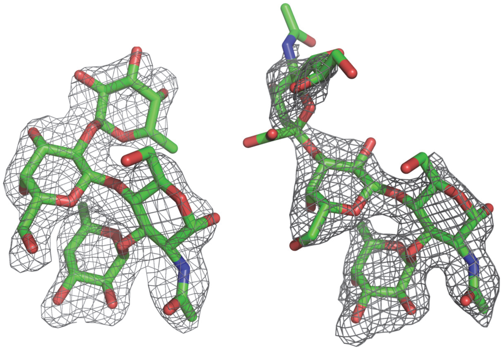 (Fo-Fc) omit electron density map of the Lewis y and 3′-sialyl Lewis x tetrasaccharide.