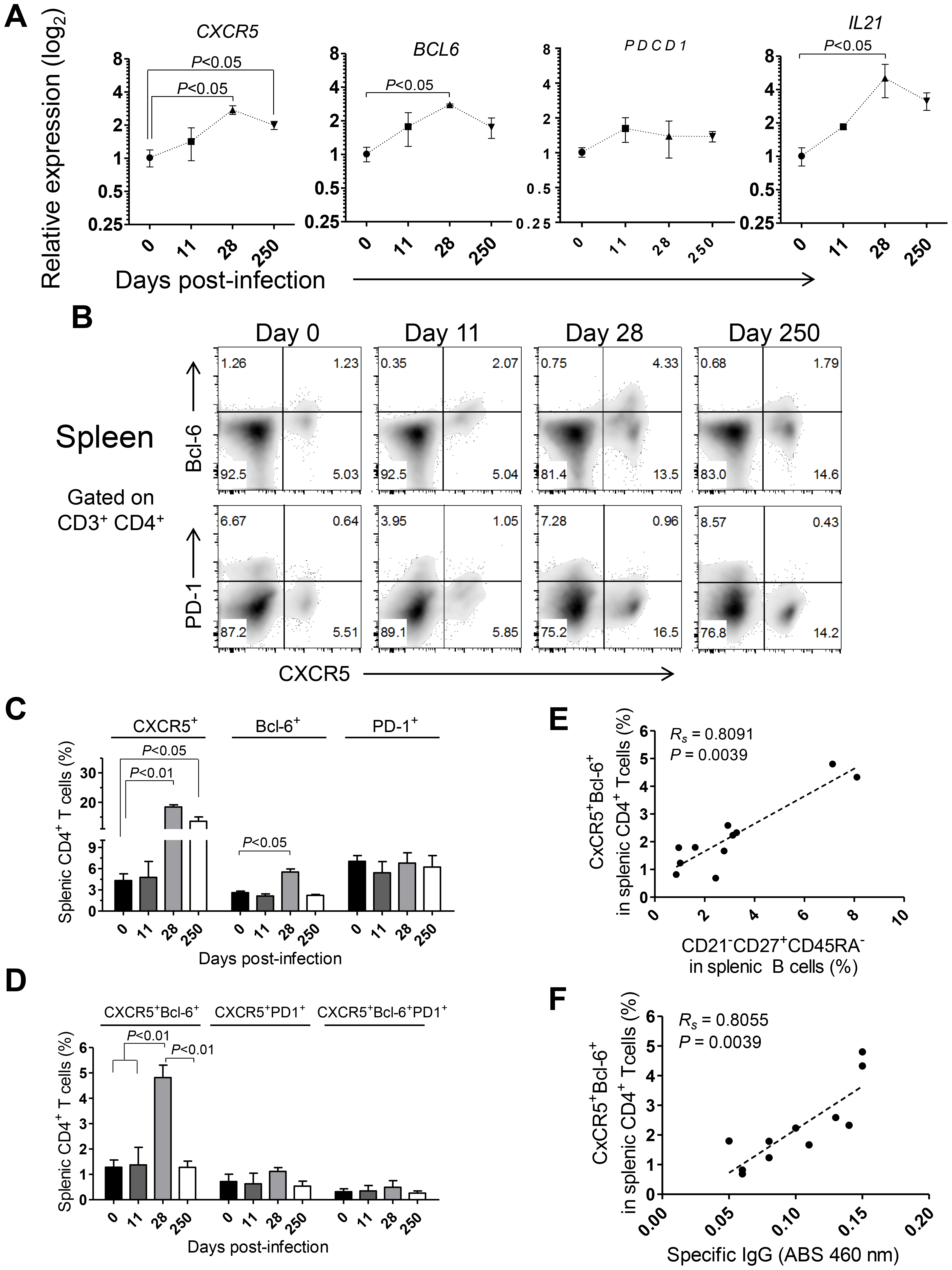 Abortive differentiation of splenic Tfh cells in <i>L. infantum</i>-infected rhesus macaques.
