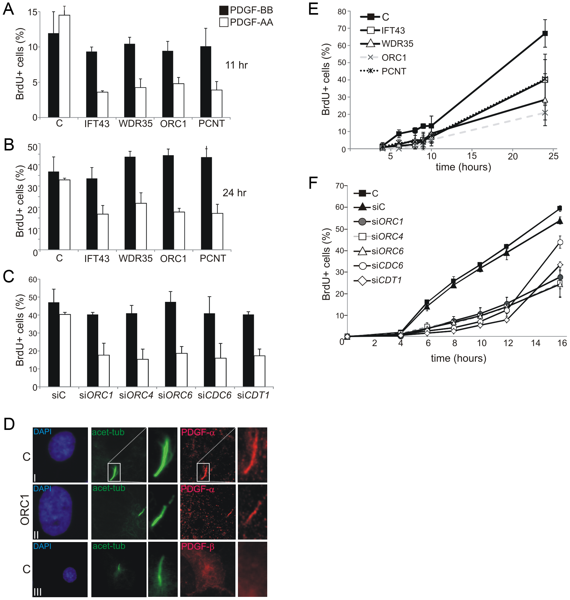 Deficiency in origin licensing proteins impairs cilia function in response to platelet-derived growth factor (PDGF).