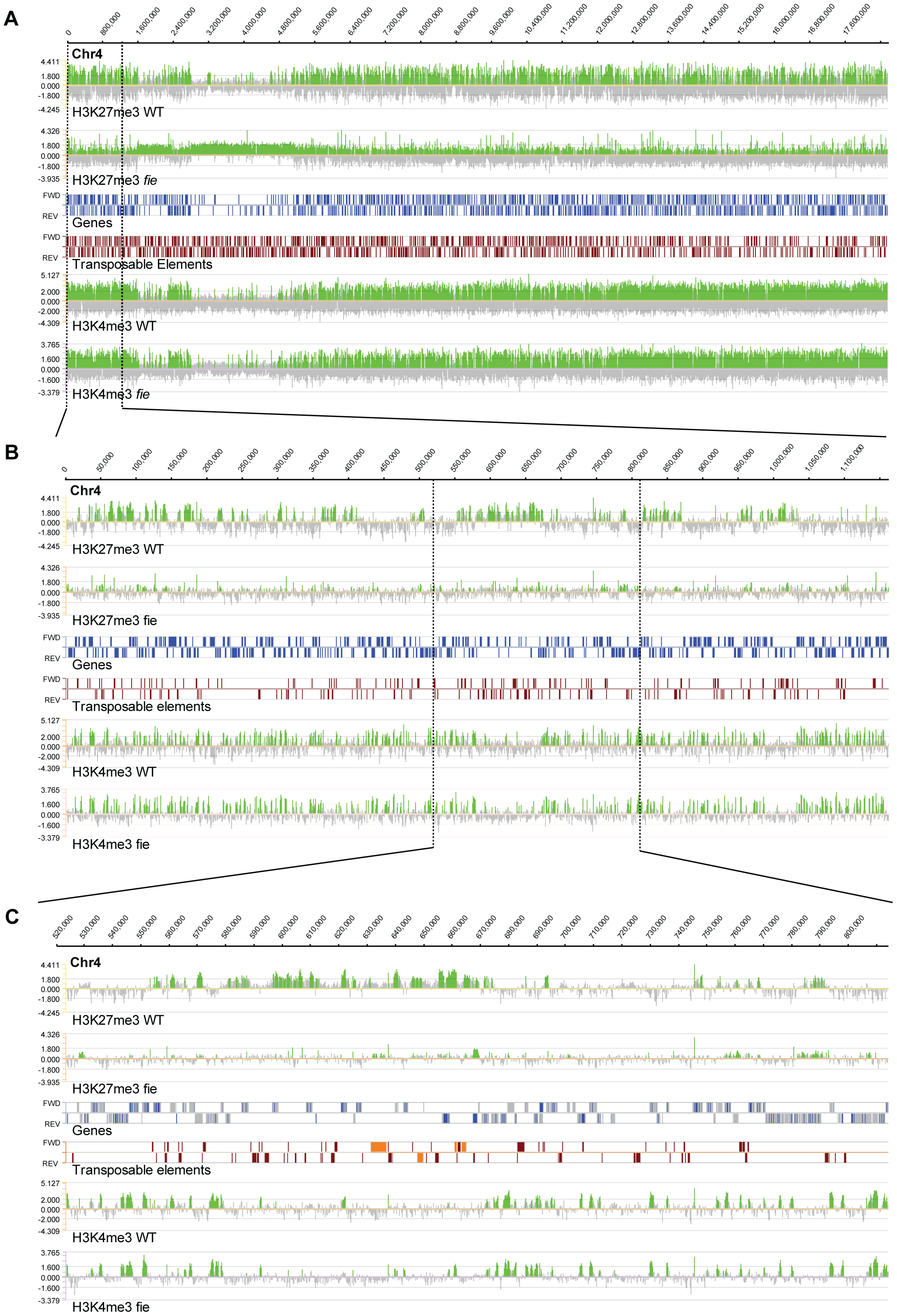 Genome-wide distribution of H3K27me3 and H3K4me3 marks.