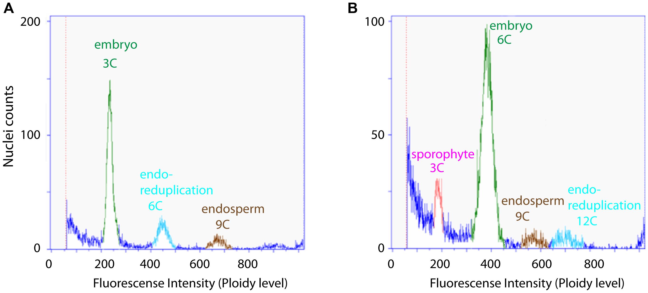 Flow cytometric seed screen on single seeds of <i>Boechera gunnisoniana</i> to analyse ploidy.