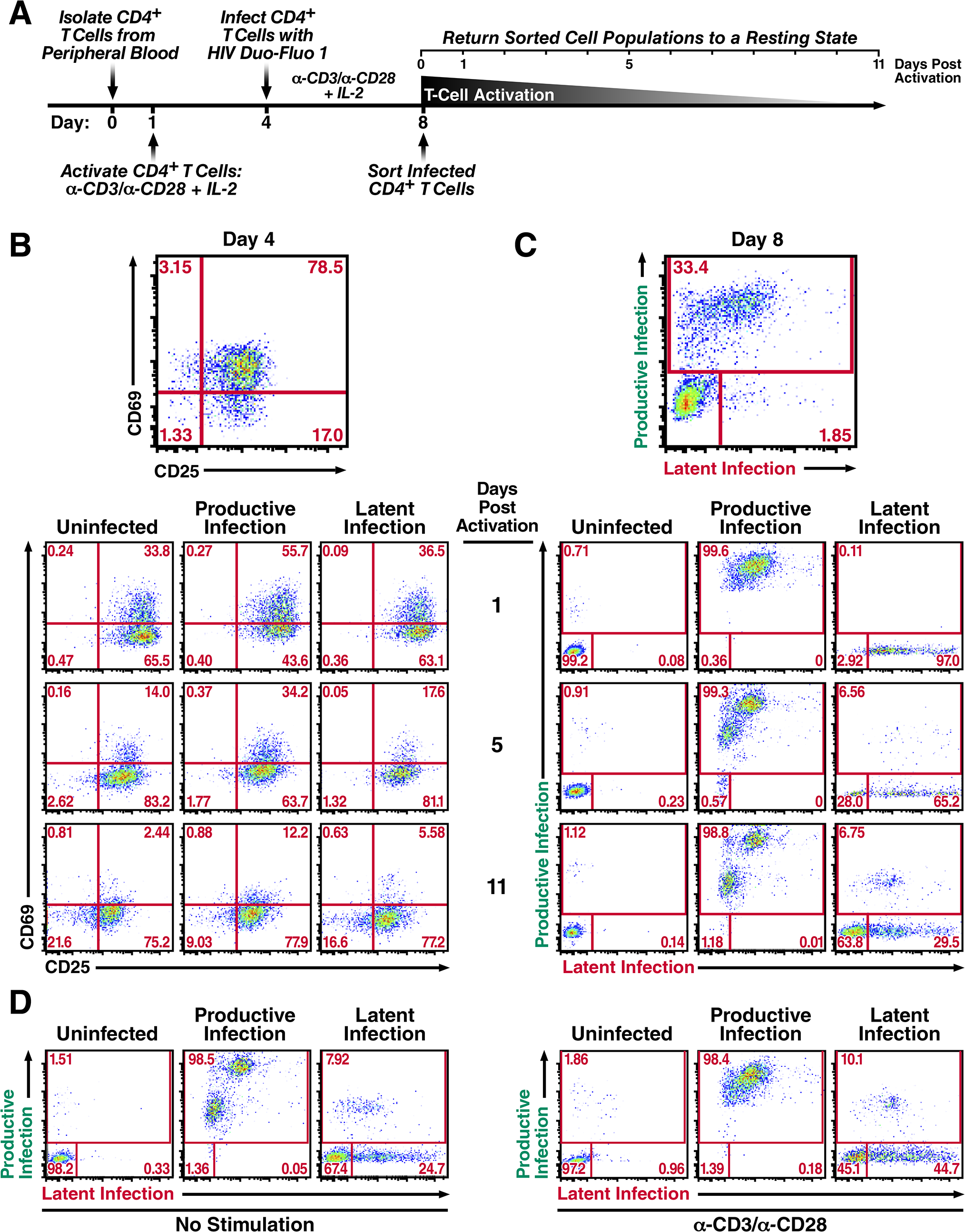 Productively infected and latently infected primary CD4<sup>+</sup> T cells isolated by FACS return to a resting state.