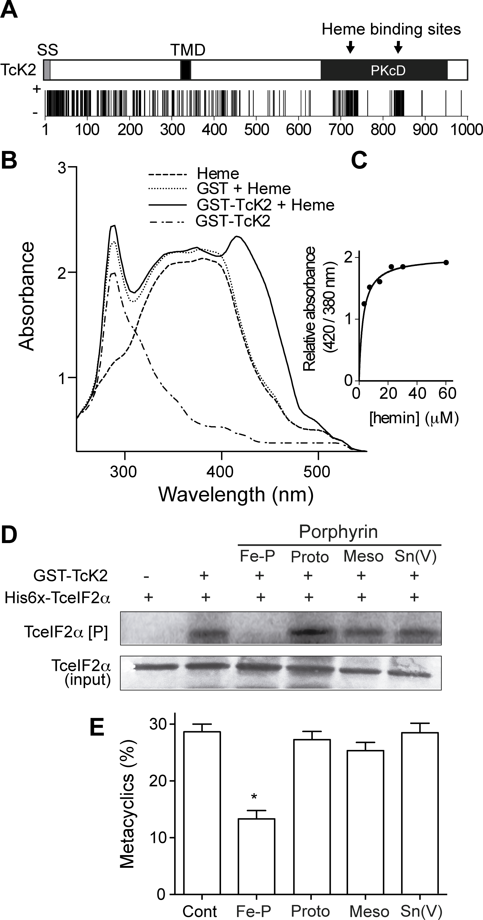 Heme binds specifically to the catalytic domain of TcK2 and inhibits TceIF2α phosphorylation and metacyclogenesis.