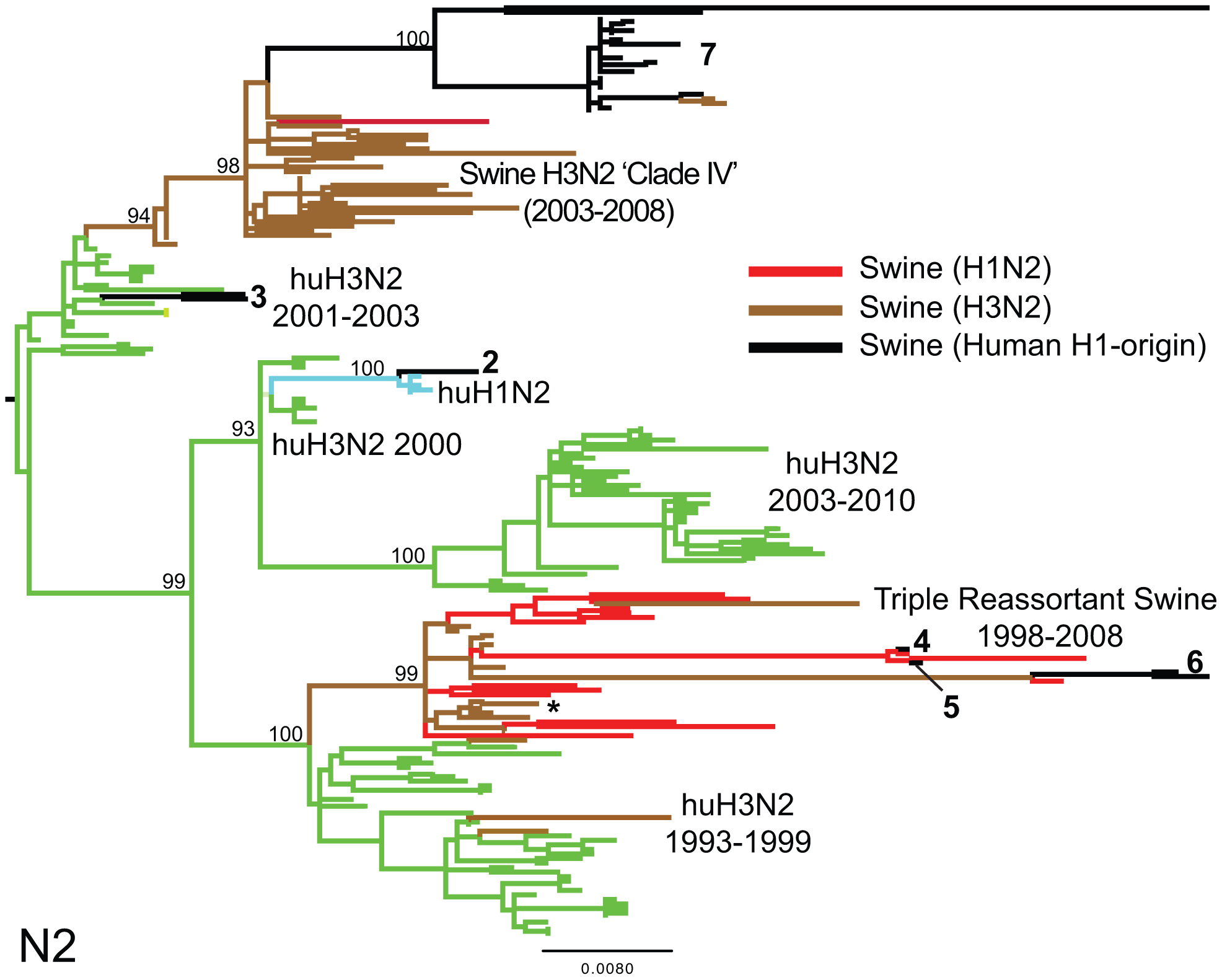 Phylogenetic relationships of the NA (N2) segment.