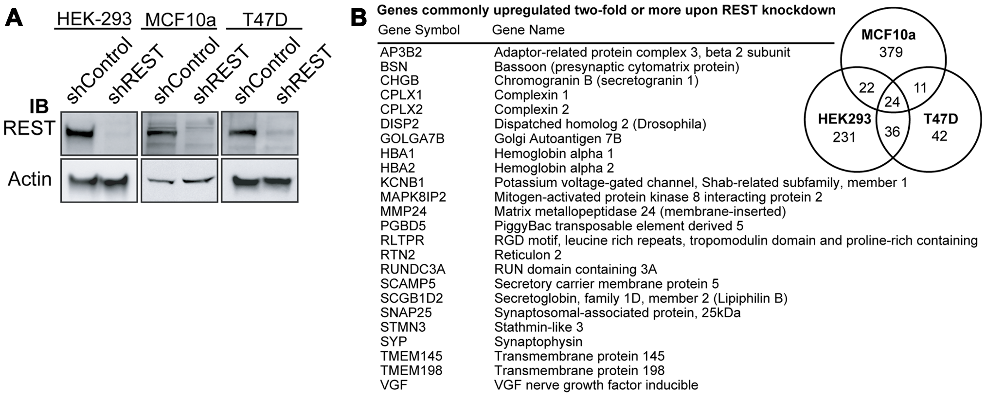 Generation of a 24-gene signature for loss of REST.