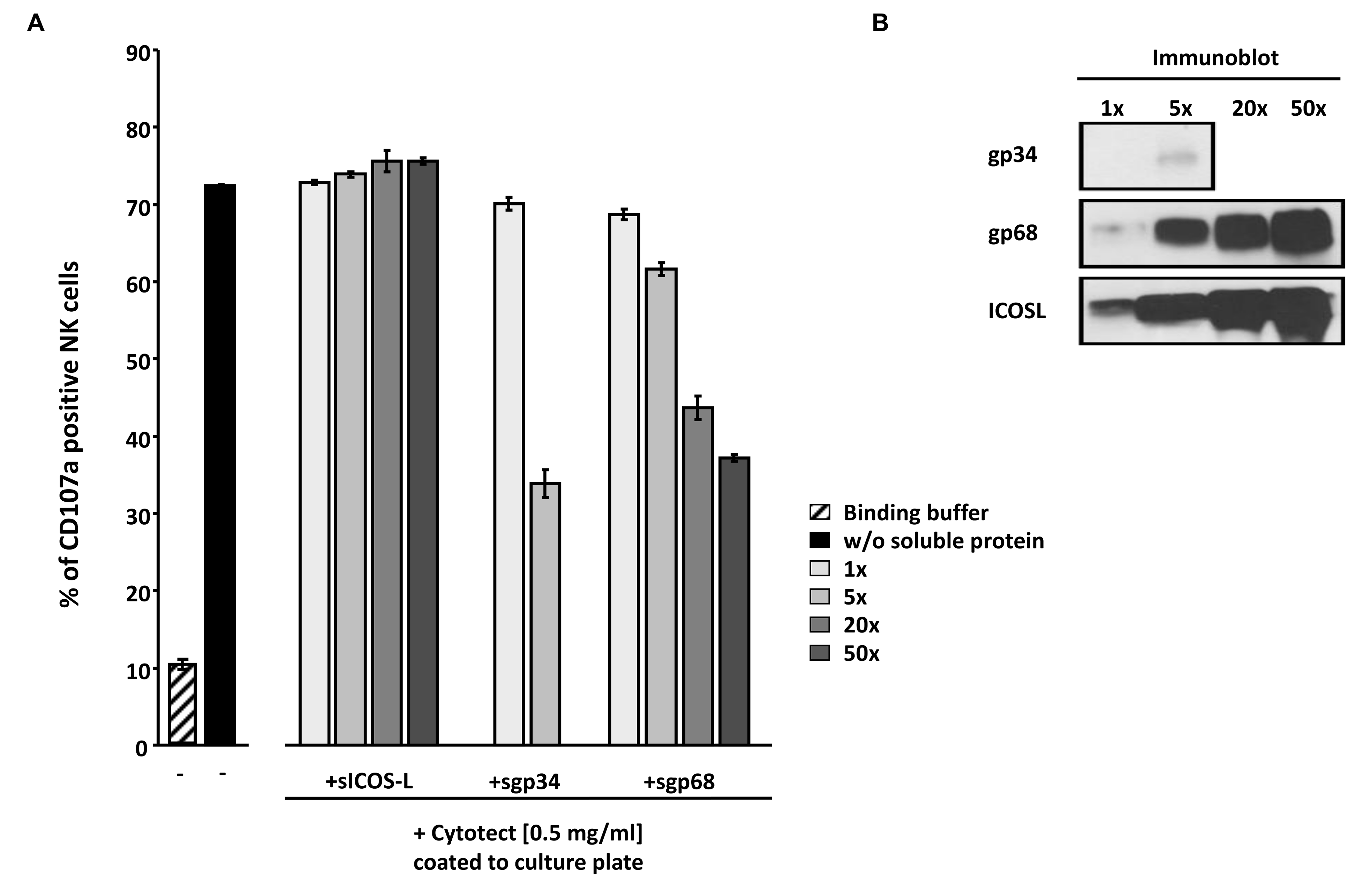 Soluble ectodomains of HCMV vFcγR interfere with antibody dependent NK cell degranulation.