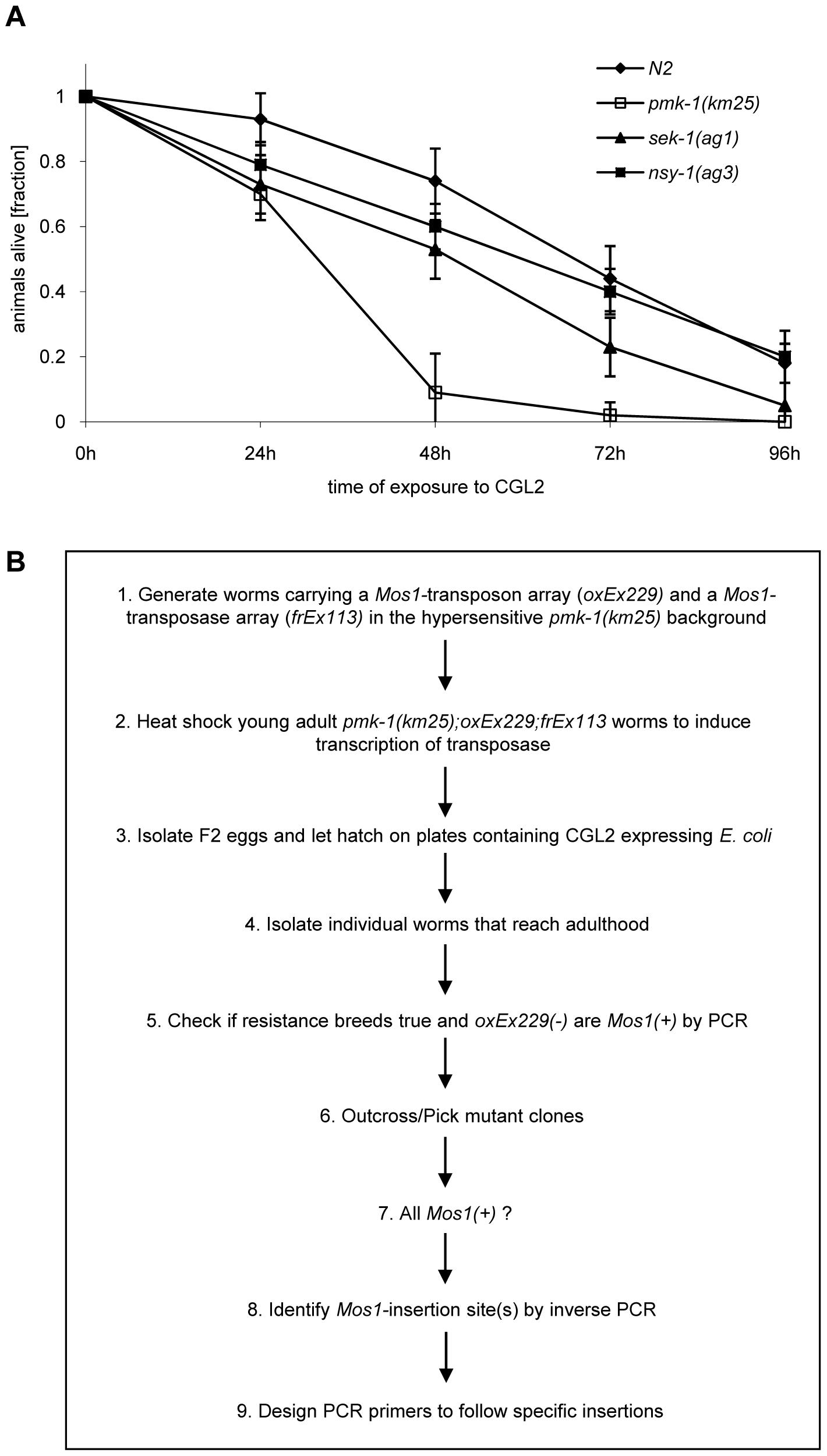 Workflow of the forward genetic screen for CGL2-resistant <i>C. elegans</i> mutants.