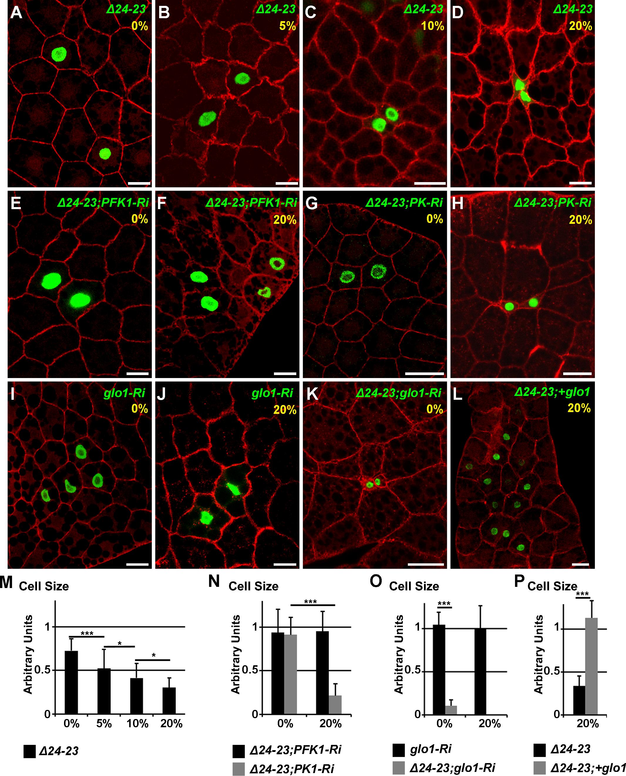 Cell-autonomous defect in <i>FASN</i> mutant FB cells.