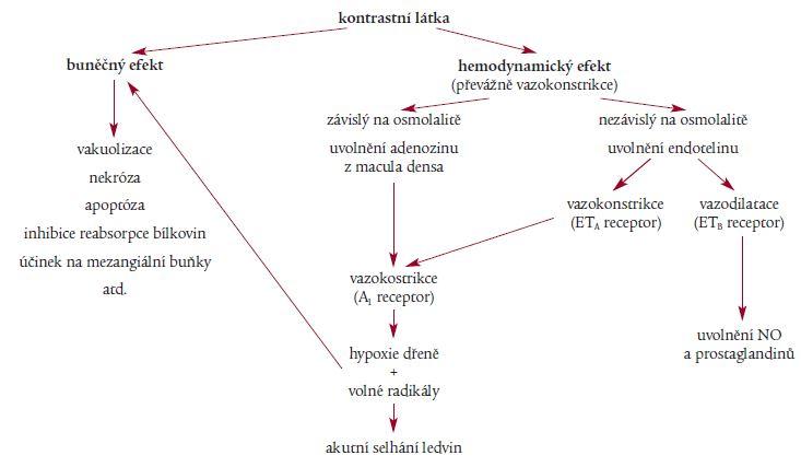 Patofyziologické cesty vedoucí ke vzniku CMIN [11].