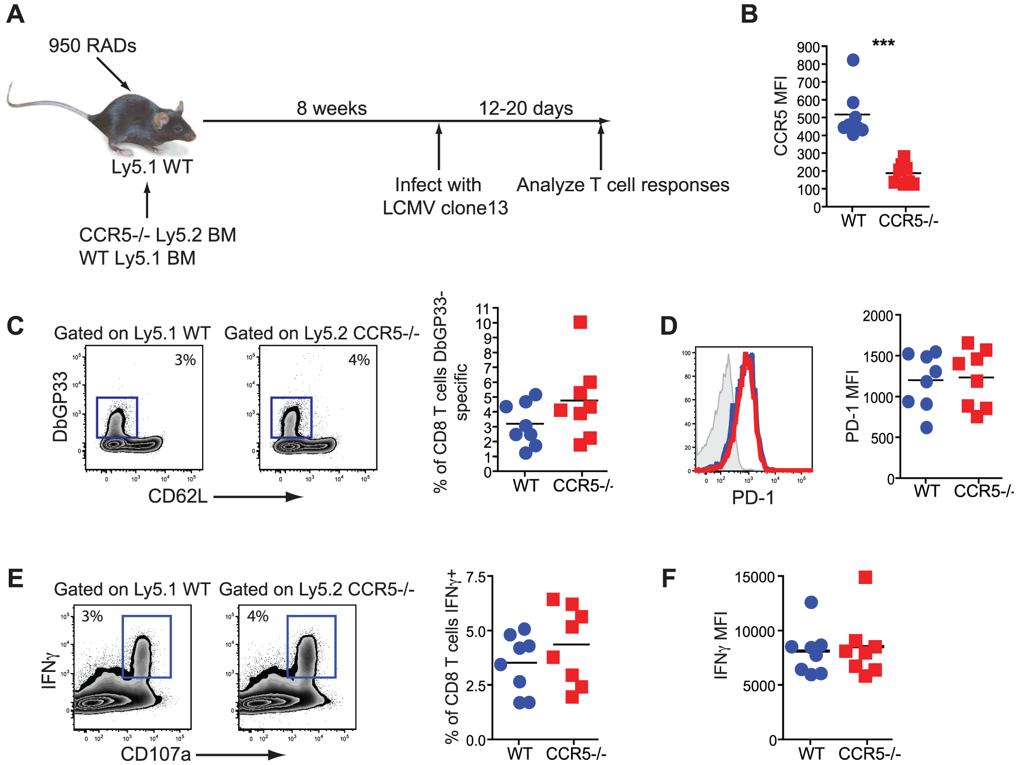 CD8 T cells do not need to bind RANTES directly.