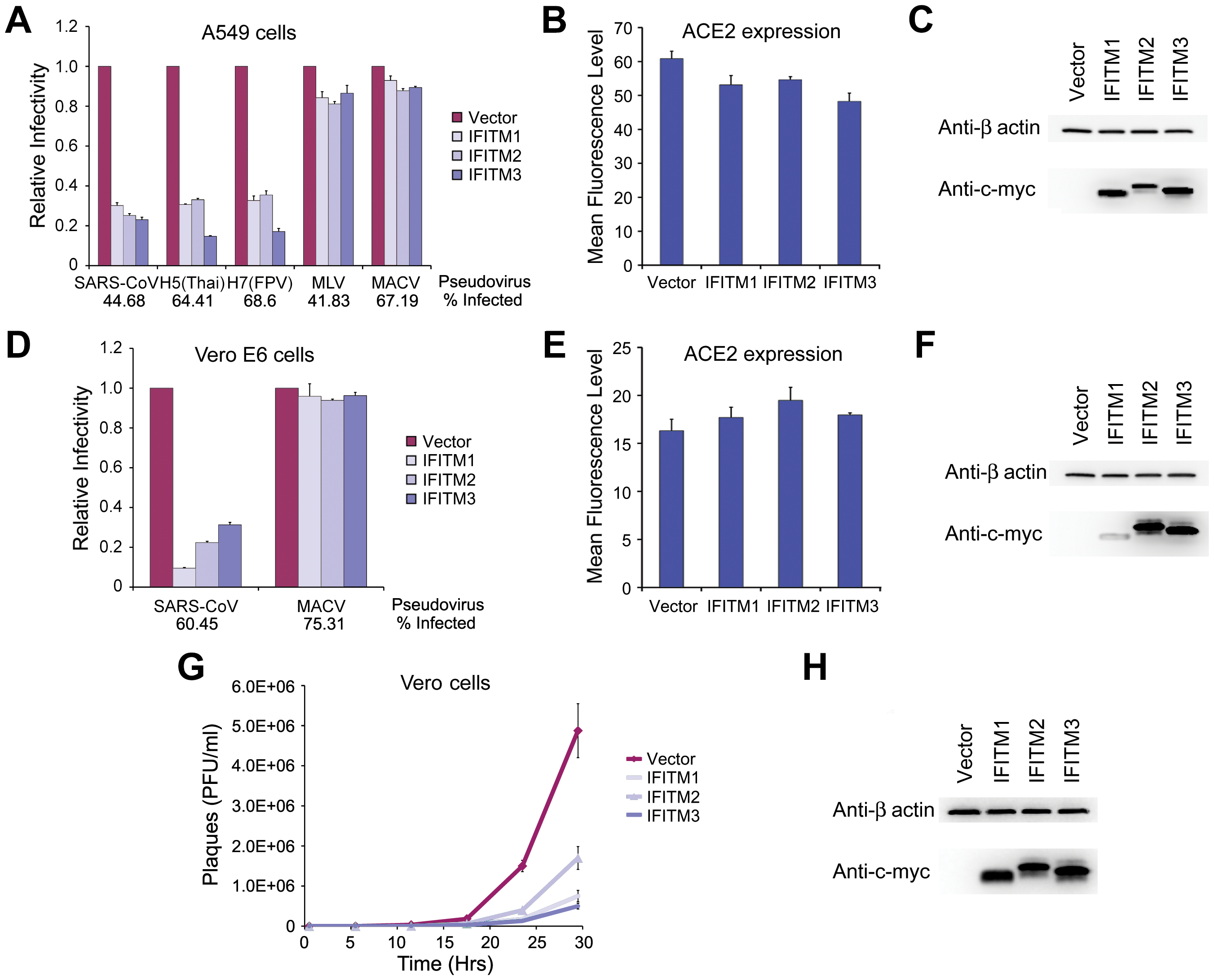 SARS-CoV S infection is restricted by IFITM1, 2, and 3.