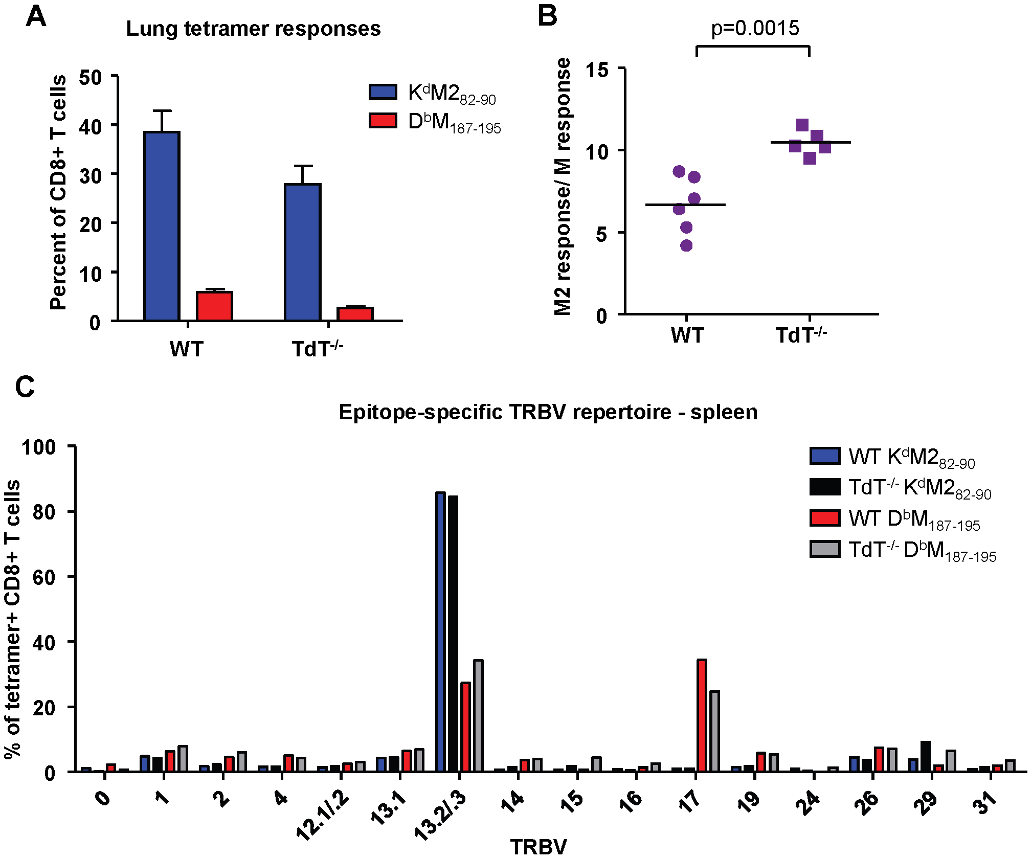 Epitope-specific CD8+ T cell responses in wild-type and TdT<sup>-/-</sup> adult CB6F1 mice.