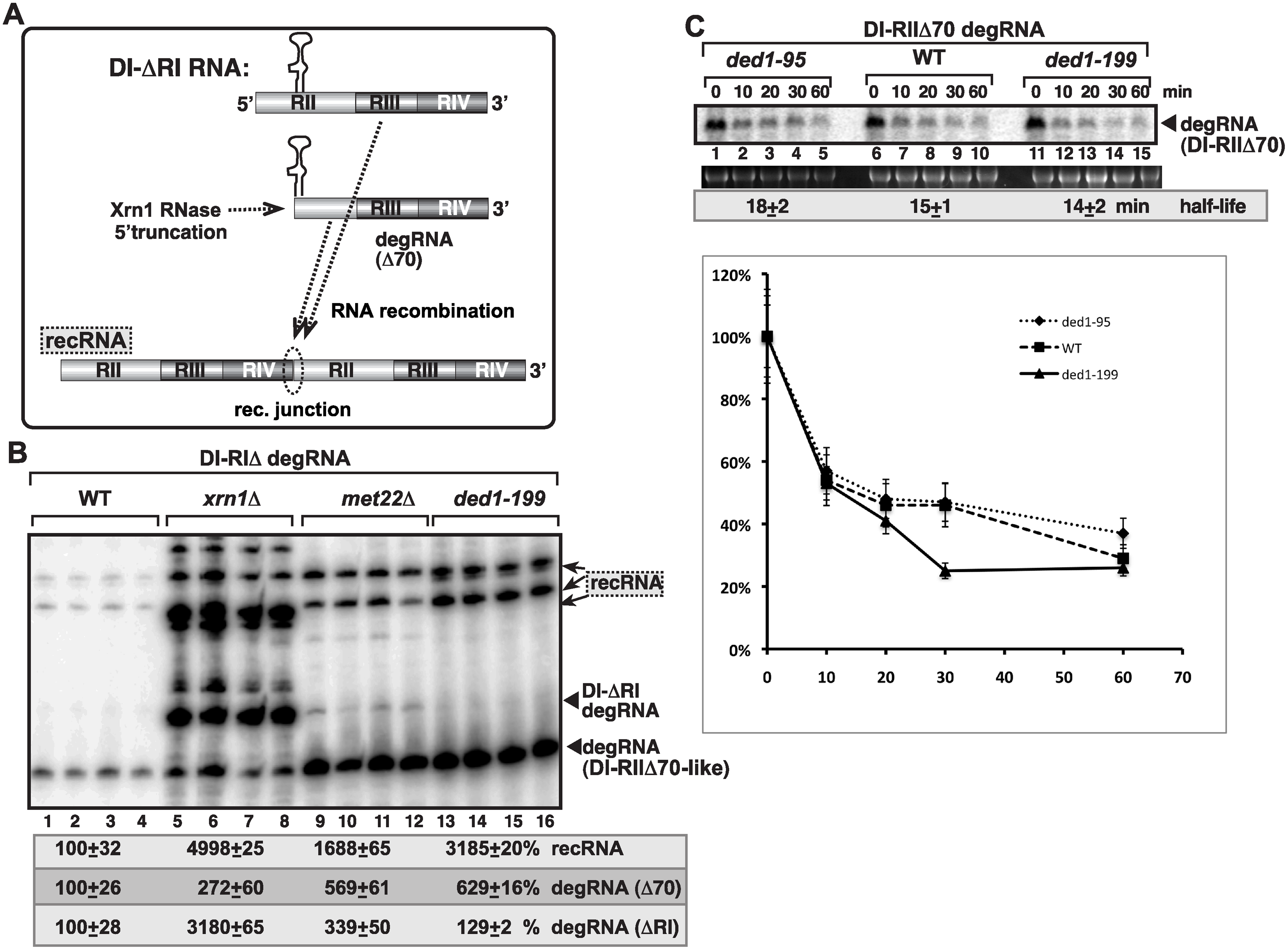 Suppression of viral RNA recombination by Ded1 helicase is independent of the Xrn1 pathway.