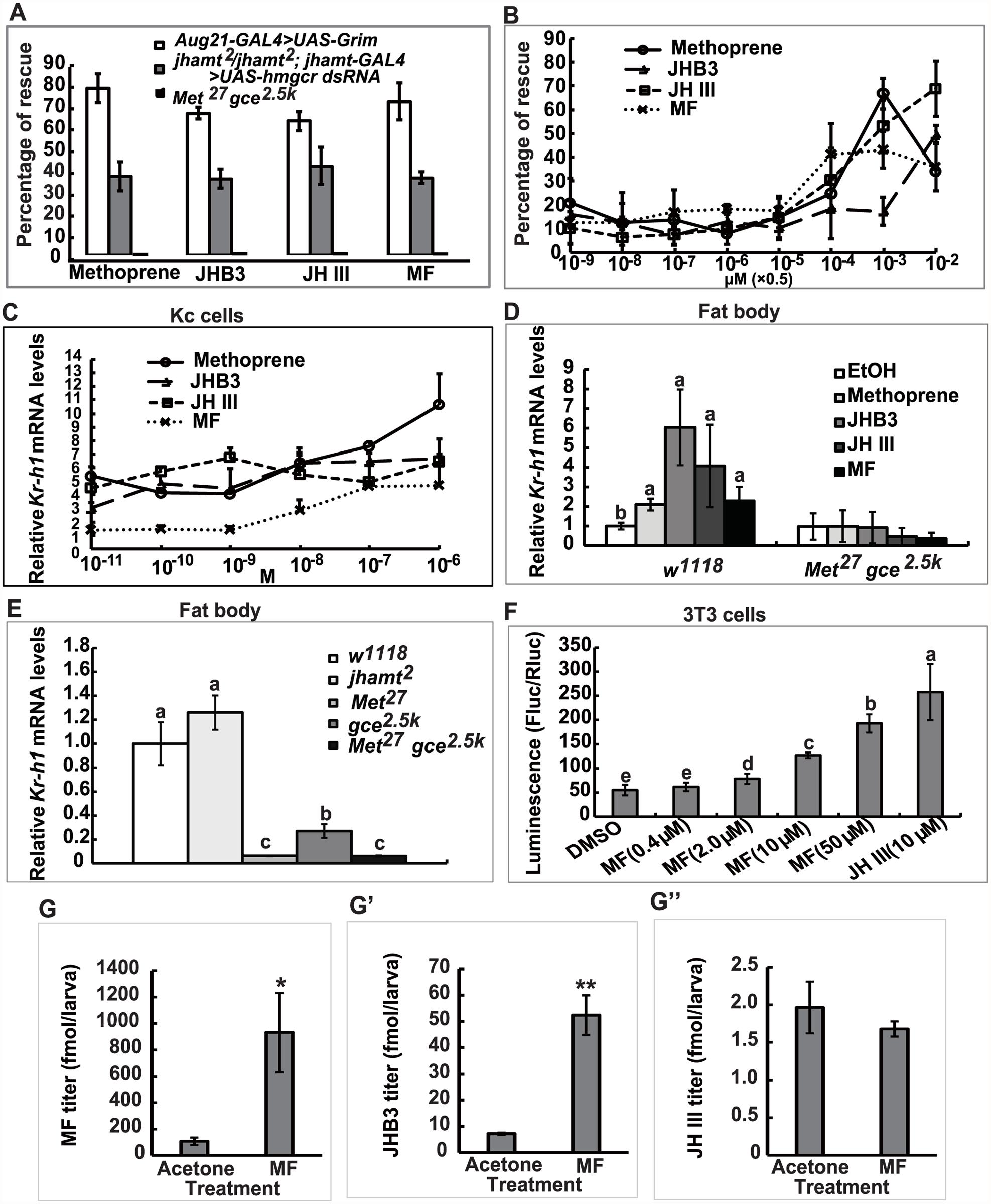 MF plays a dual role: as a JHB3 precursor and as a hormone.