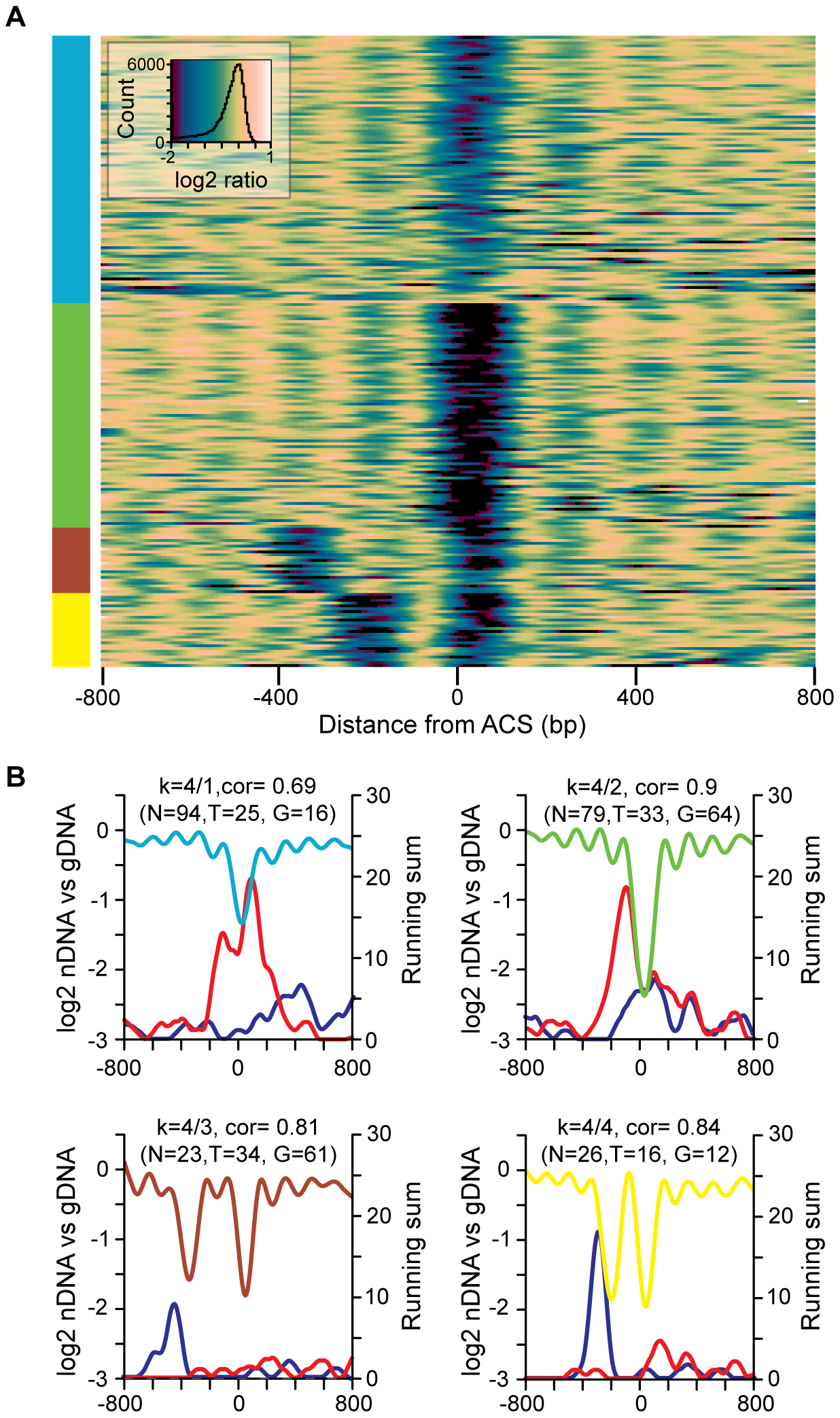 The diversity of nucleosome occupancy patterns at replication origins.