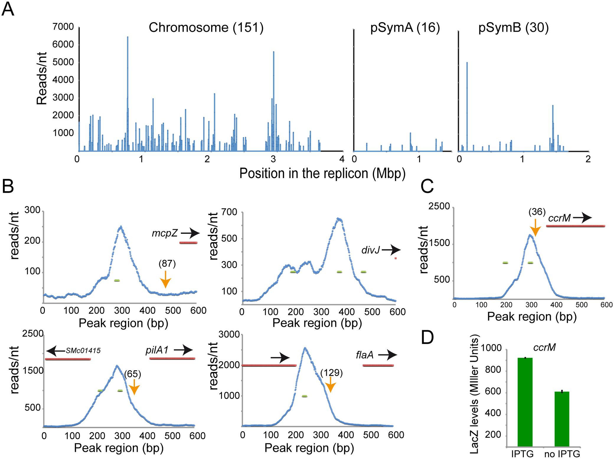 ChIP-Seq analysis reveals direct targets of CtrA.