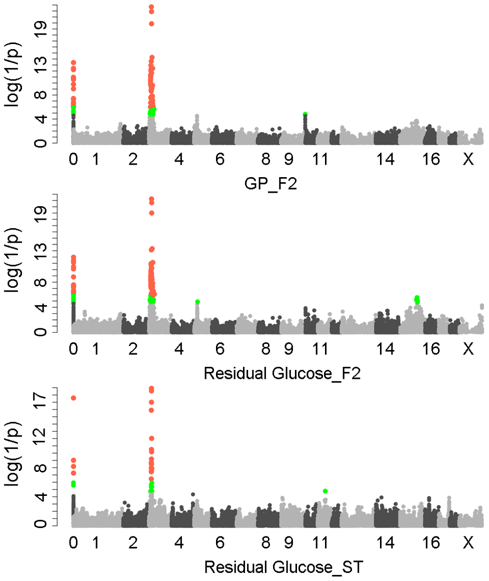 GWAS results for glycolytic potential and residual glycogen contents in longissimus muscle from the F<sub>2</sub> and Sutai populations.