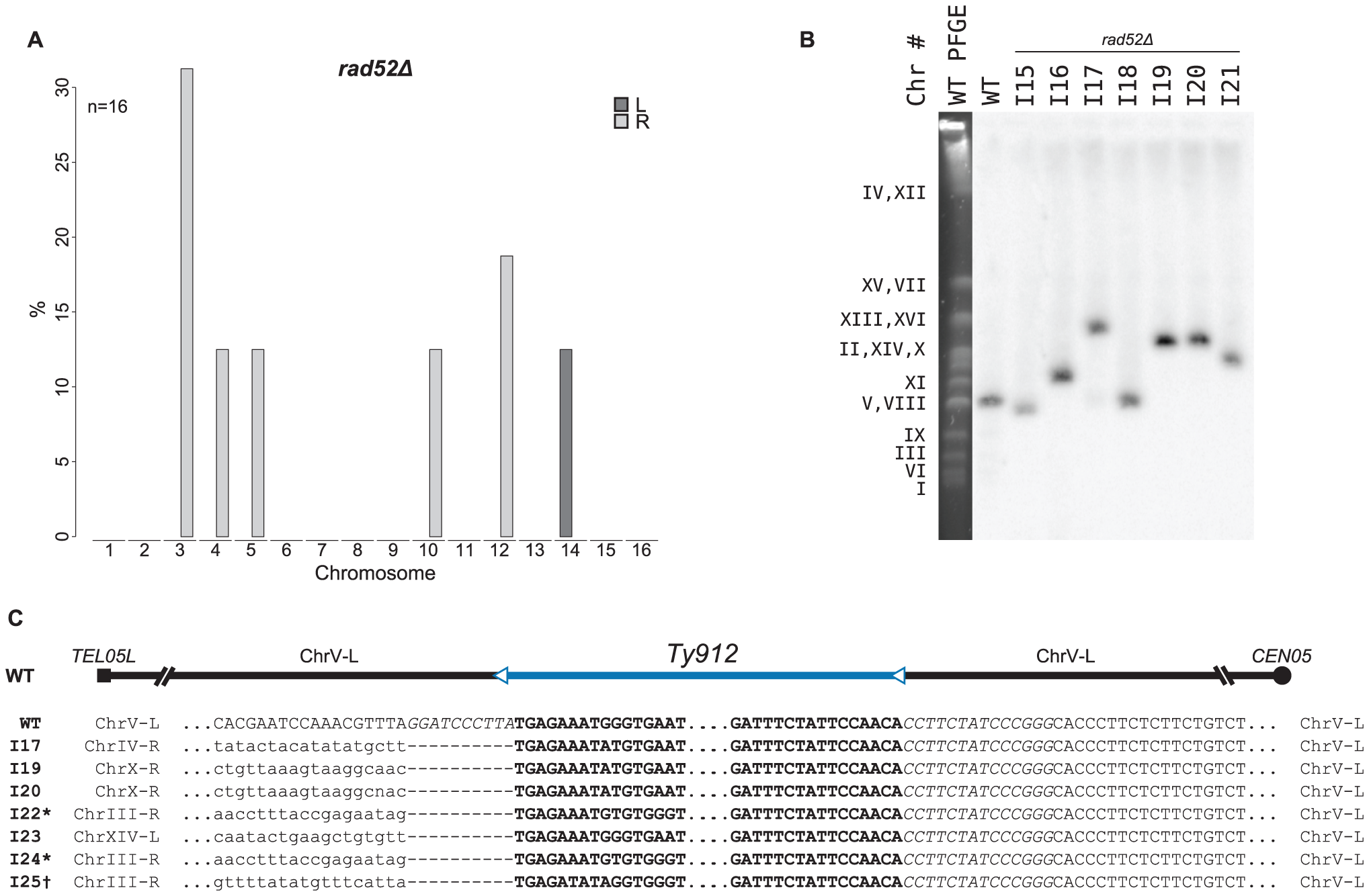 MLPA, Southern blot, and sequencing analyses of GCRs derived from a <i>rad52Δ</i> recombination-deficient mutant strain.